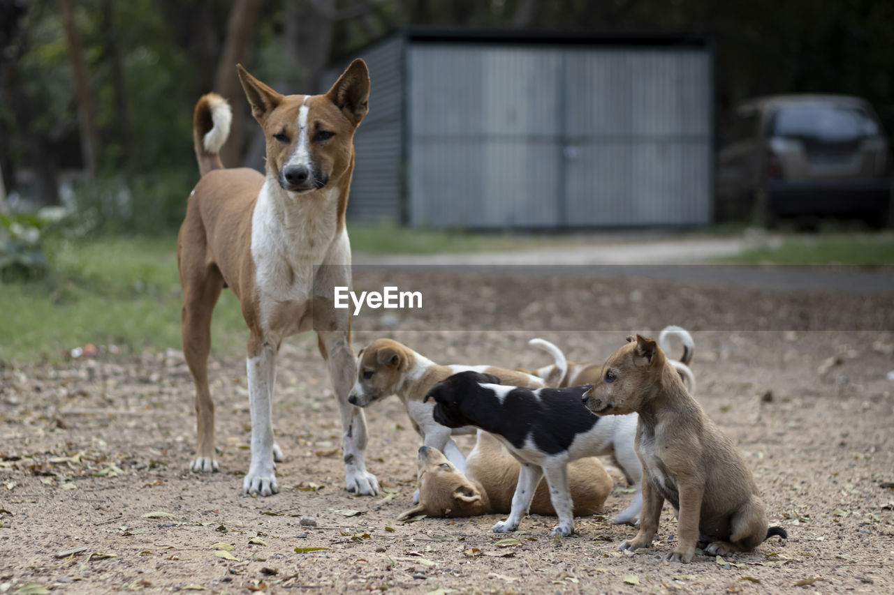 PORTRAIT OF DOGS WITH DOG ON LAND