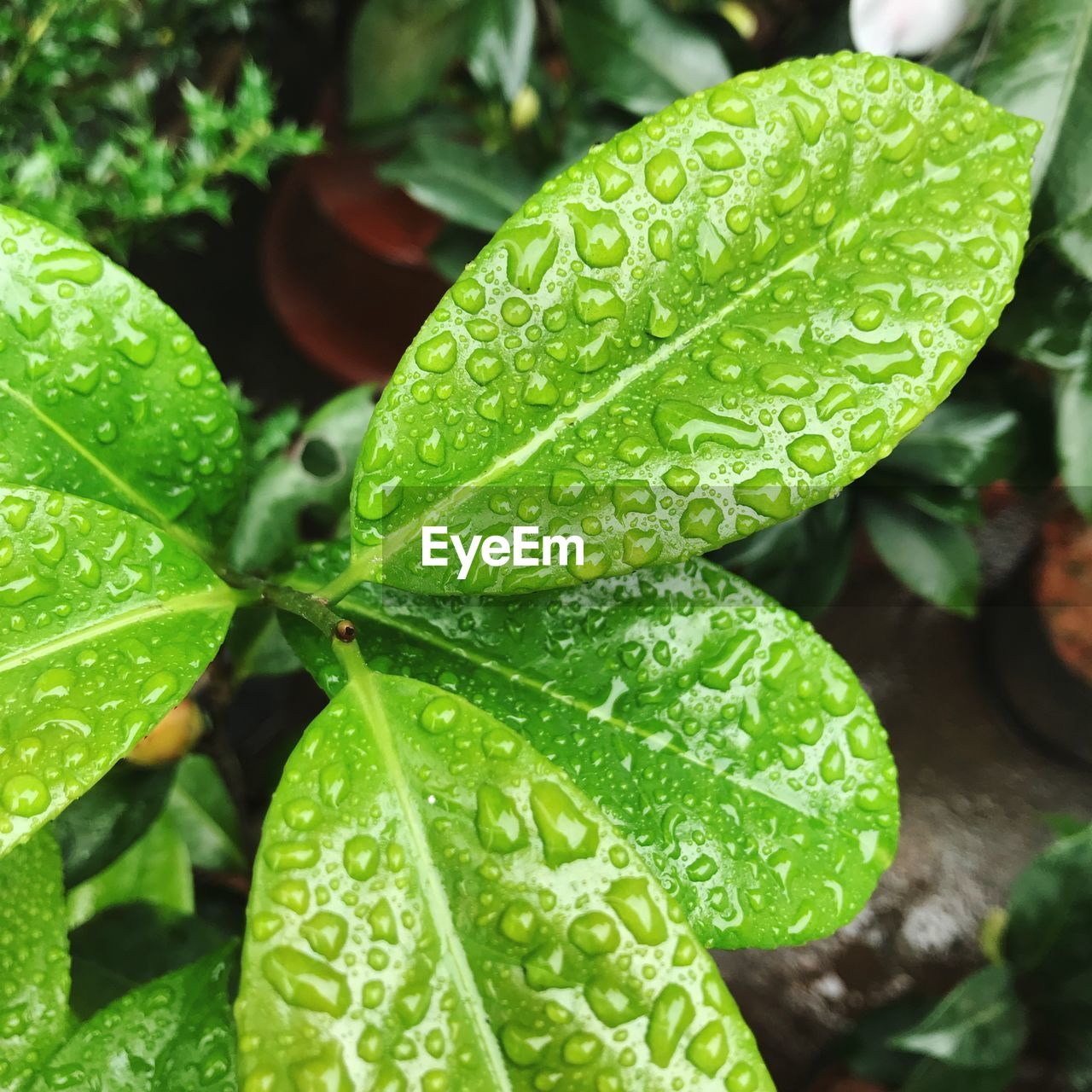 green color, leaf, drop, plant part, water, growth, wet, close-up, beauty in nature, focus on foreground, no people, day, nature, plant, freshness, outdoors, rain, selective focus, rainy season, leaves, raindrop, dew