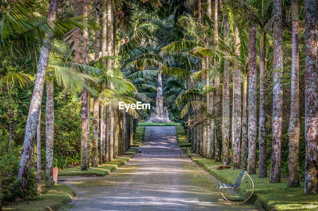tree, plant, direction, the way forward, palm tree, tropical climate, nature, growth, diminishing perspective, beauty in nature, no people, forest, tranquility, day, footpath, land, treelined, outdoors, trunk, tree trunk, woodland, bamboo - plant, tropical tree