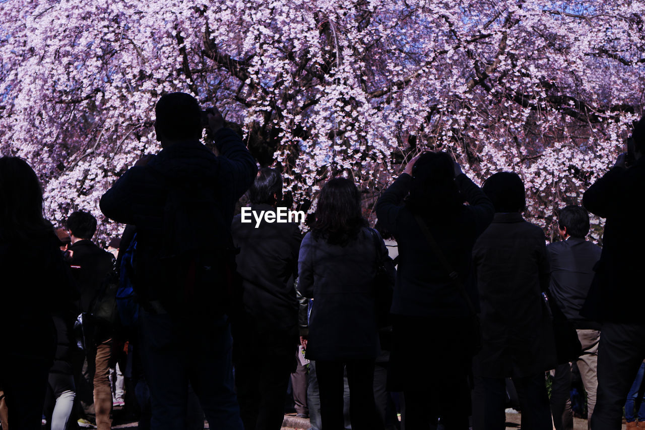 People At Park During Cherry Blossoms