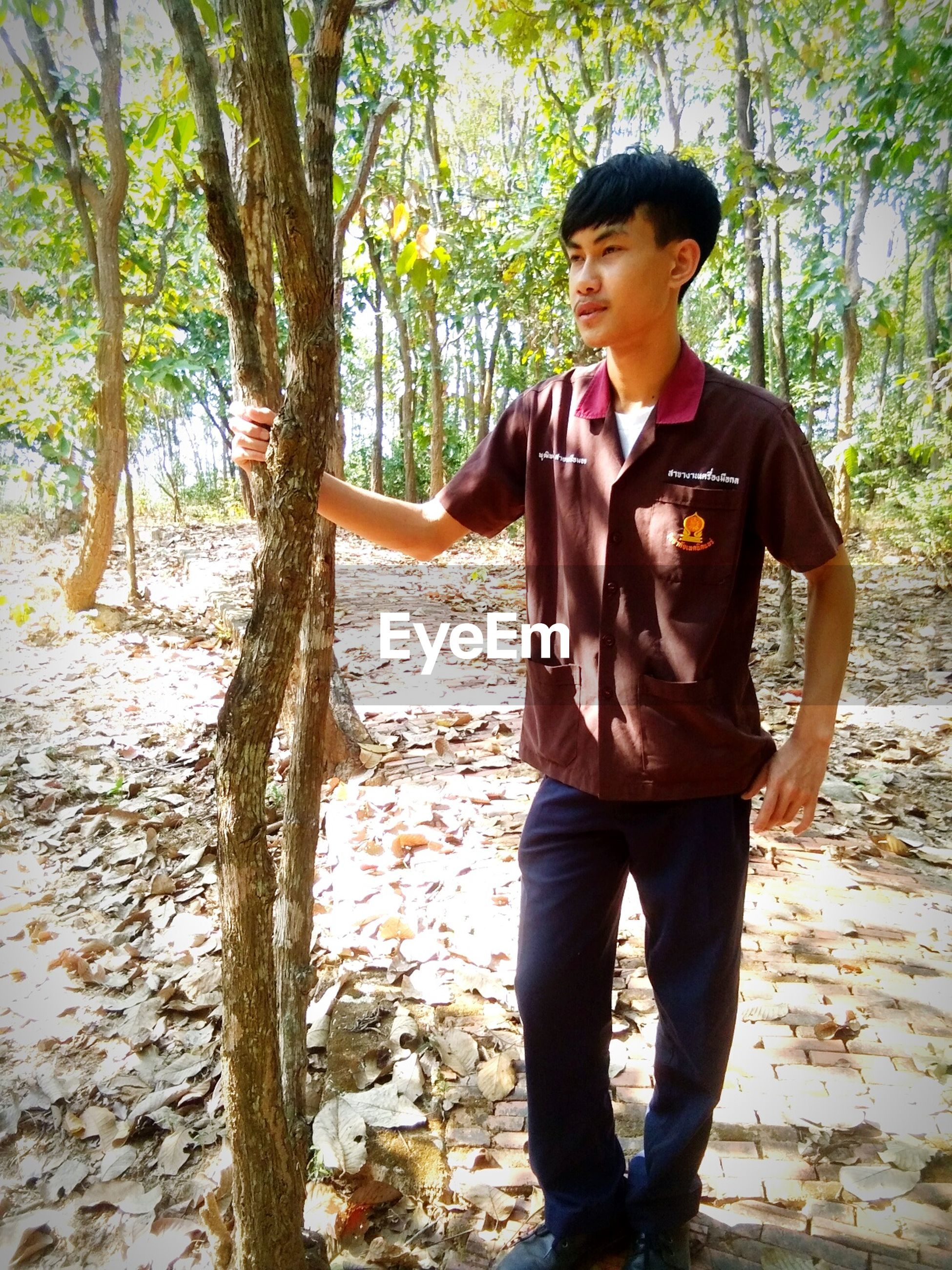 tree, real people, one person, standing, front view, day, forest, full length, outdoors, tree trunk, sunlight, nature, lifestyles, young adult, people