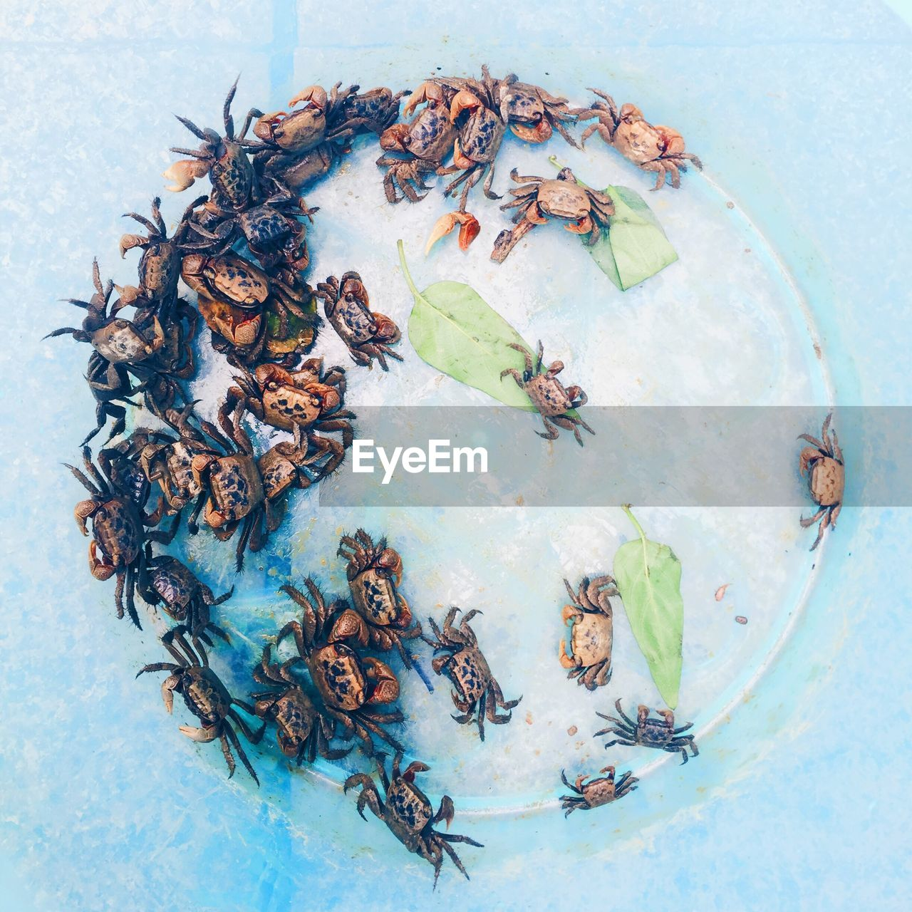 High Angle View Of Crabs In Container