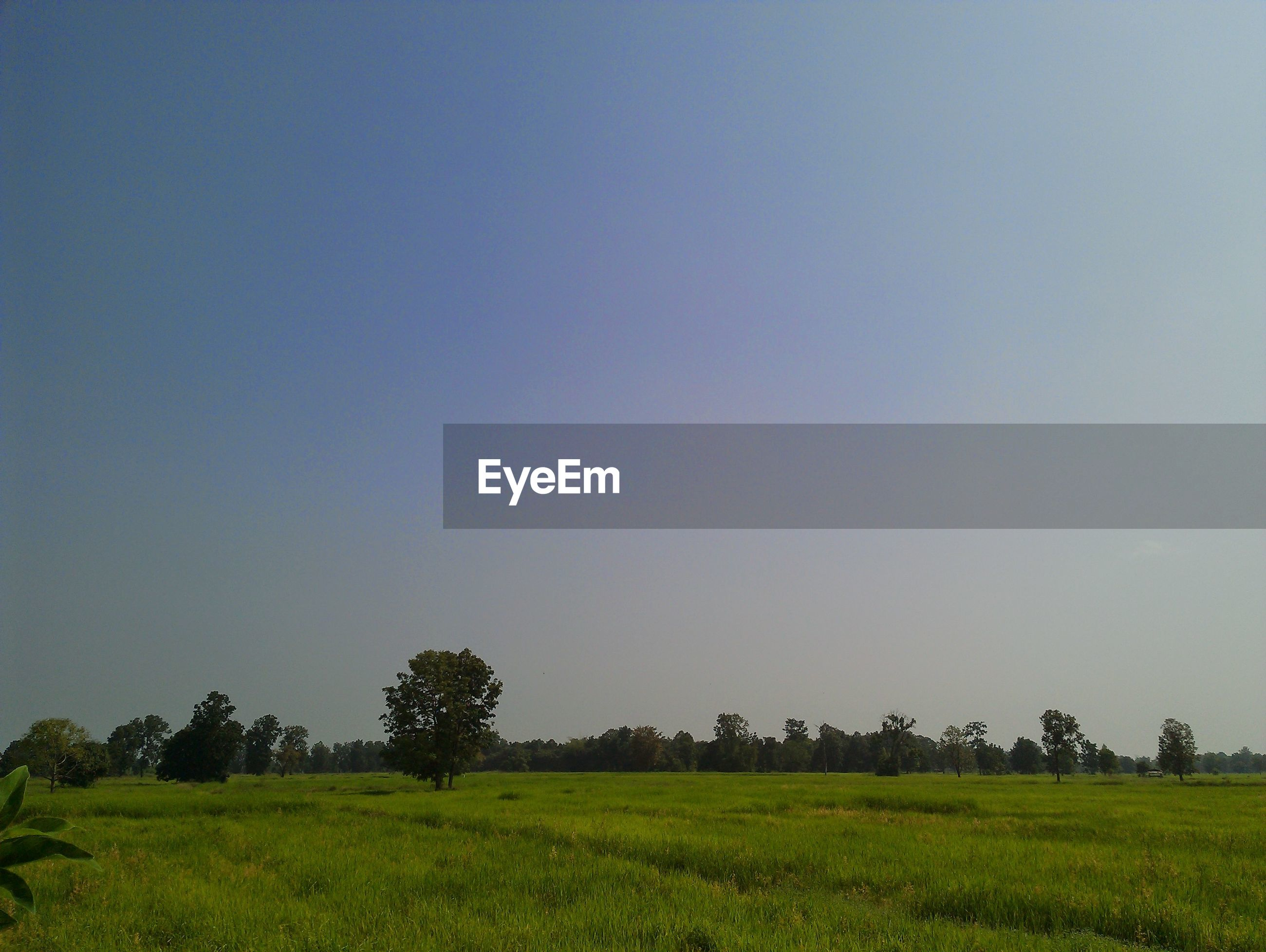 SCENIC VIEW OF LAND AGAINST CLEAR SKY