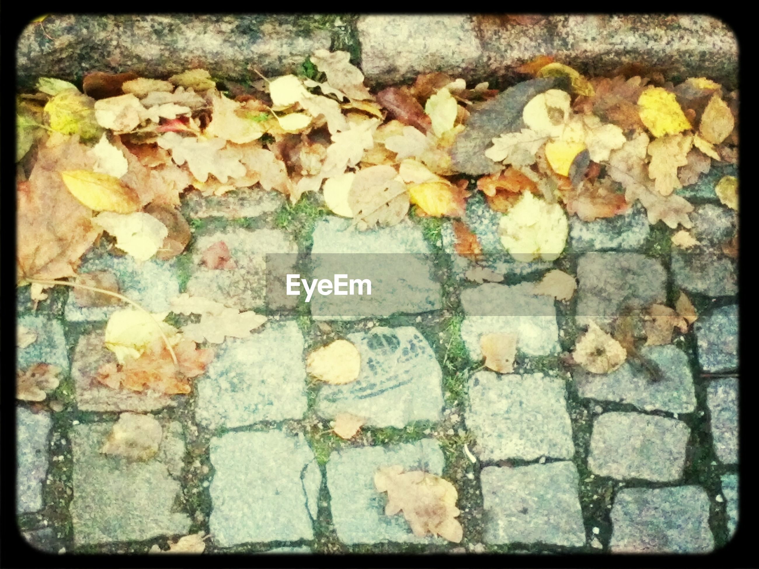 transfer print, auto post production filter, leaf, autumn, high angle view, dry, fallen, season, leaves, change, abundance, full frame, nature, fragility, outdoors, day, backgrounds, yellow, street, cobblestone