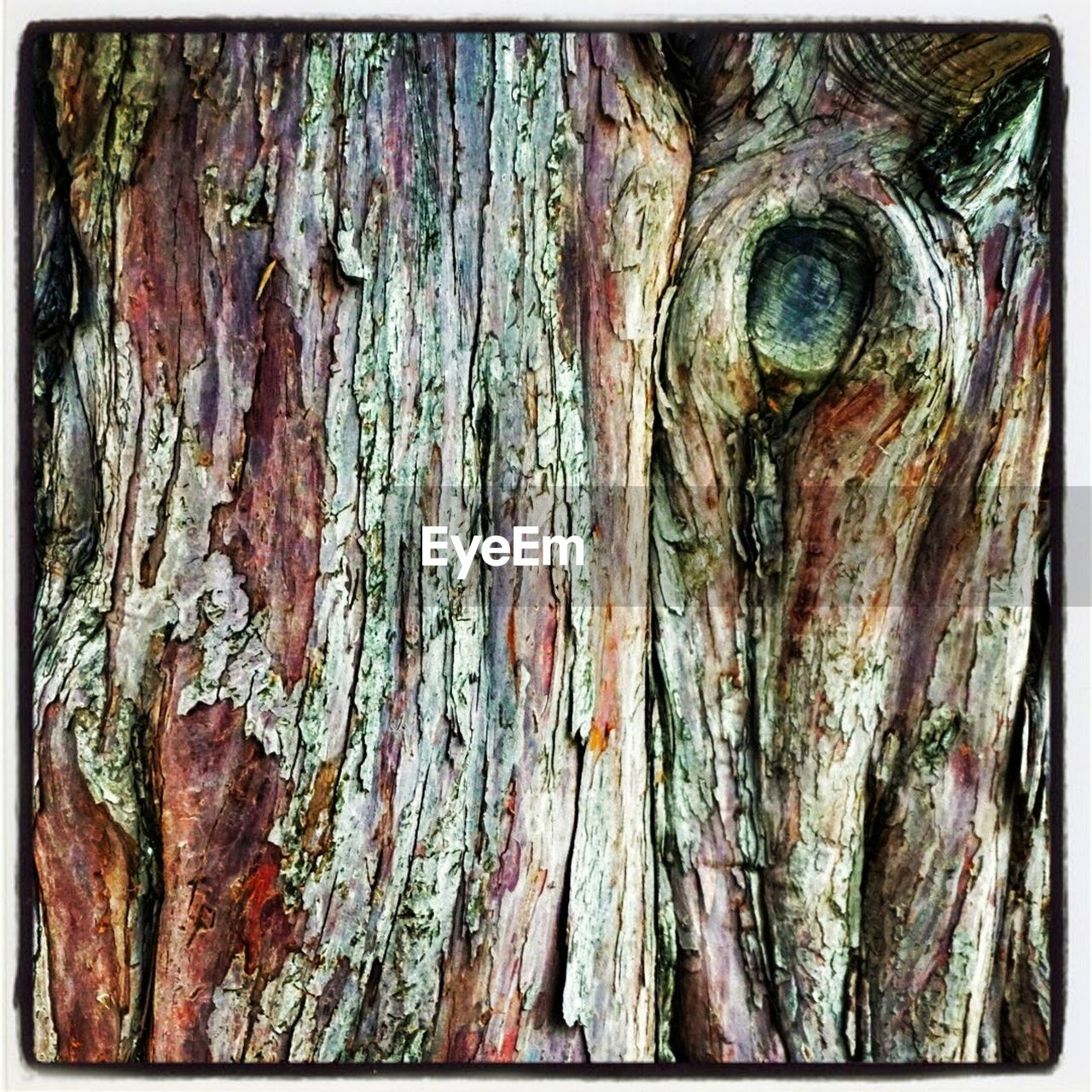 tree trunk, textured, rough, wood - material, bark, close-up, knotted wood, day, tree, full frame, outdoors, no people, nature