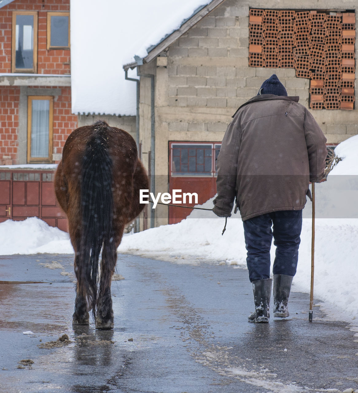FULL LENGTH REAR VIEW OF A HORSE ON SNOW