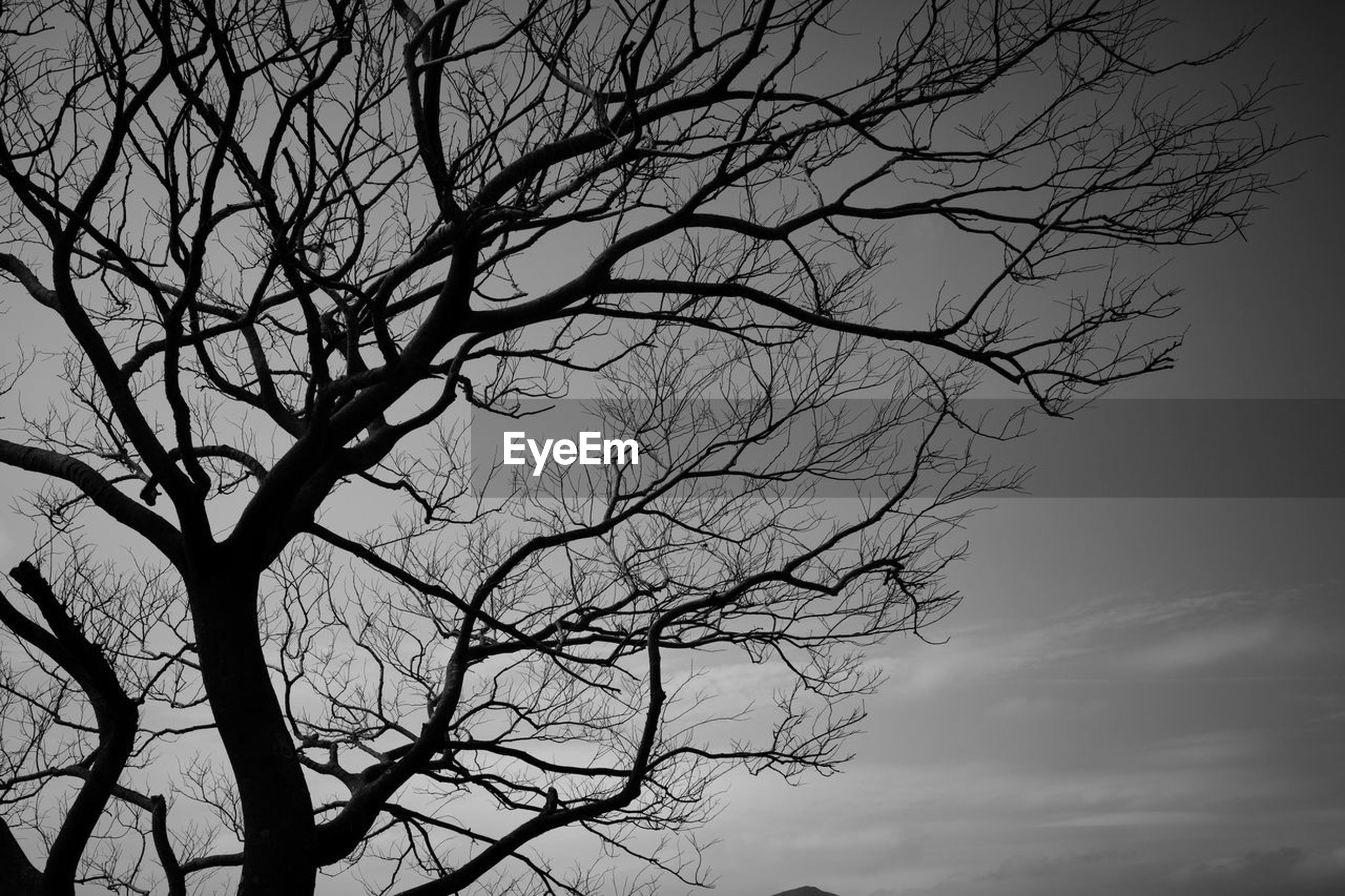 tree, bare tree, sky, branch, plant, black and white, silhouette, monochrome, nature, darkness, monochrome photography, low angle view, no people, beauty in nature, cloud, tranquility, outdoors, scenics - nature, tree trunk, trunk, dusk, tranquil scene