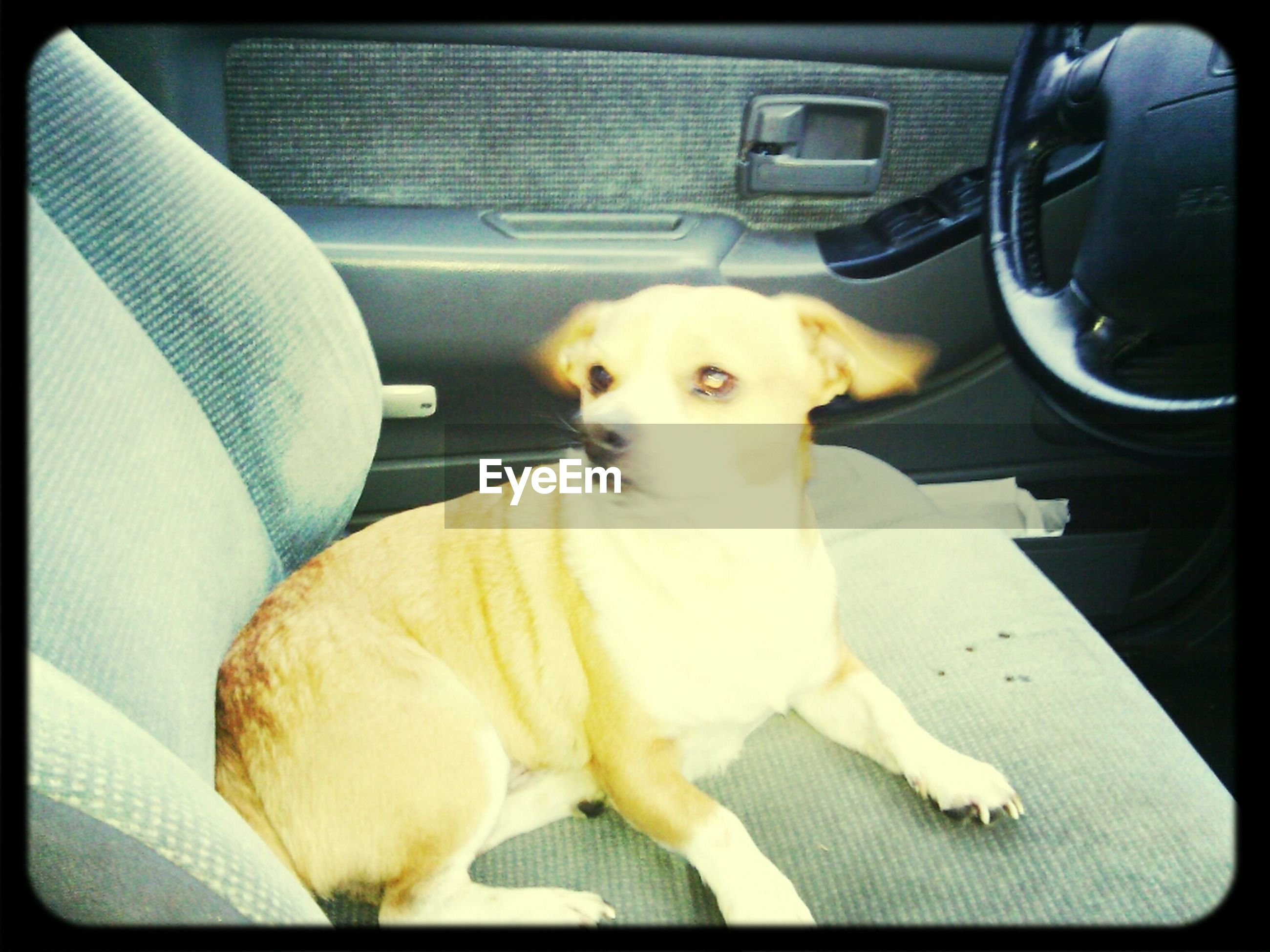 pets, dog, domestic animals, one animal, animal themes, indoors, transportation, mammal, transfer print, car, mode of transport, land vehicle, portrait, sitting, relaxation, looking at camera, vehicle interior, auto post production filter, resting, lying down
