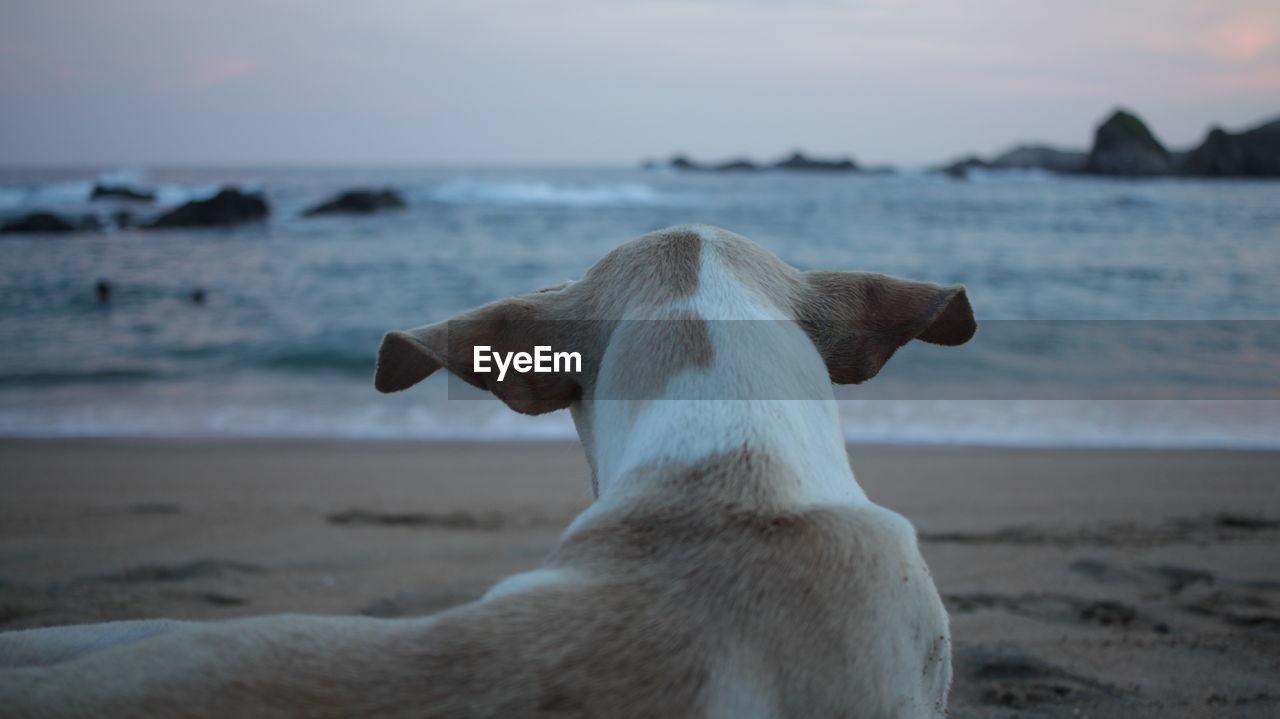 Rear view of dog at sea shore