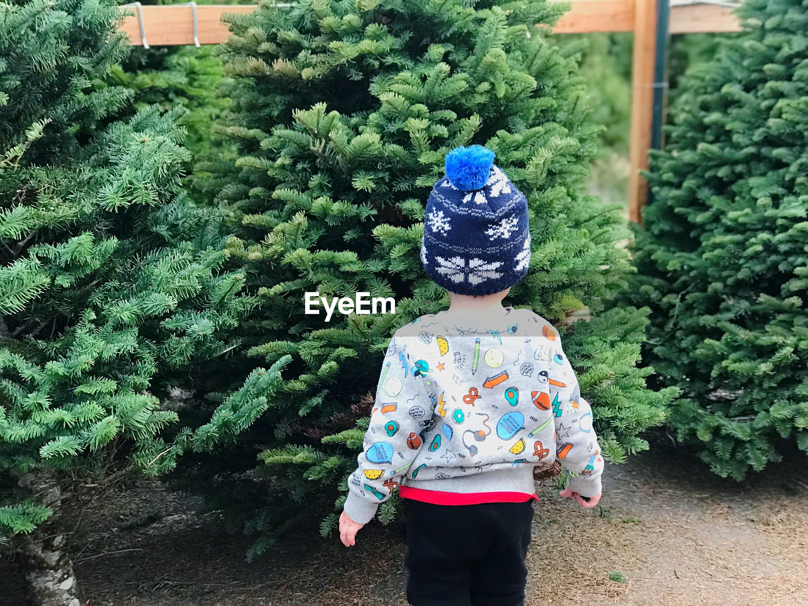 childhood, real people, plant, outdoors, green color, front or back yard, day, growth, one person, boys, tree, standing, nature, lifestyles, people