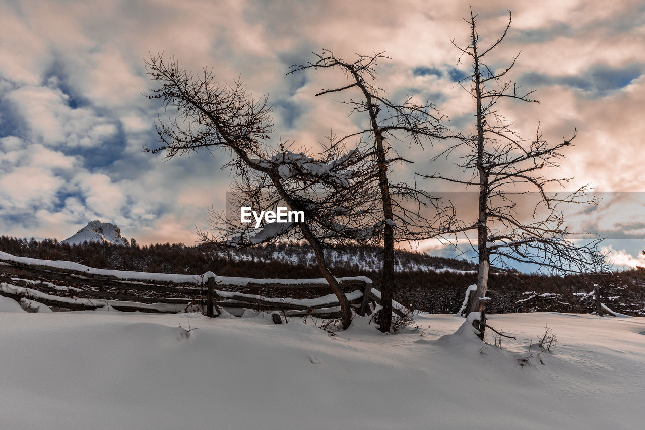 BARE TREES ON SNOW COVERED LAND AGAINST SKY DURING WINTER