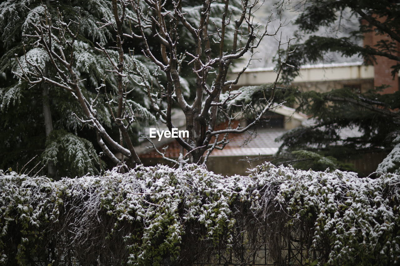 plant, tree, snow, cold temperature, winter, growth, nature, beauty in nature, no people, day, covering, branch, outdoors, frozen, built structure, tranquility, focus on foreground, architecture, building exterior, extreme weather, snowing