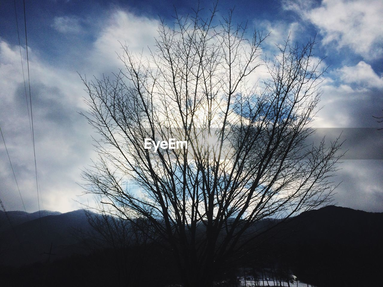 sky, bare tree, tree, tranquility, scenics, cloud - sky, tranquil scene, silhouette, nature, beauty in nature, branch, outdoors, mountain, landscape, day, low angle view, no people, lone