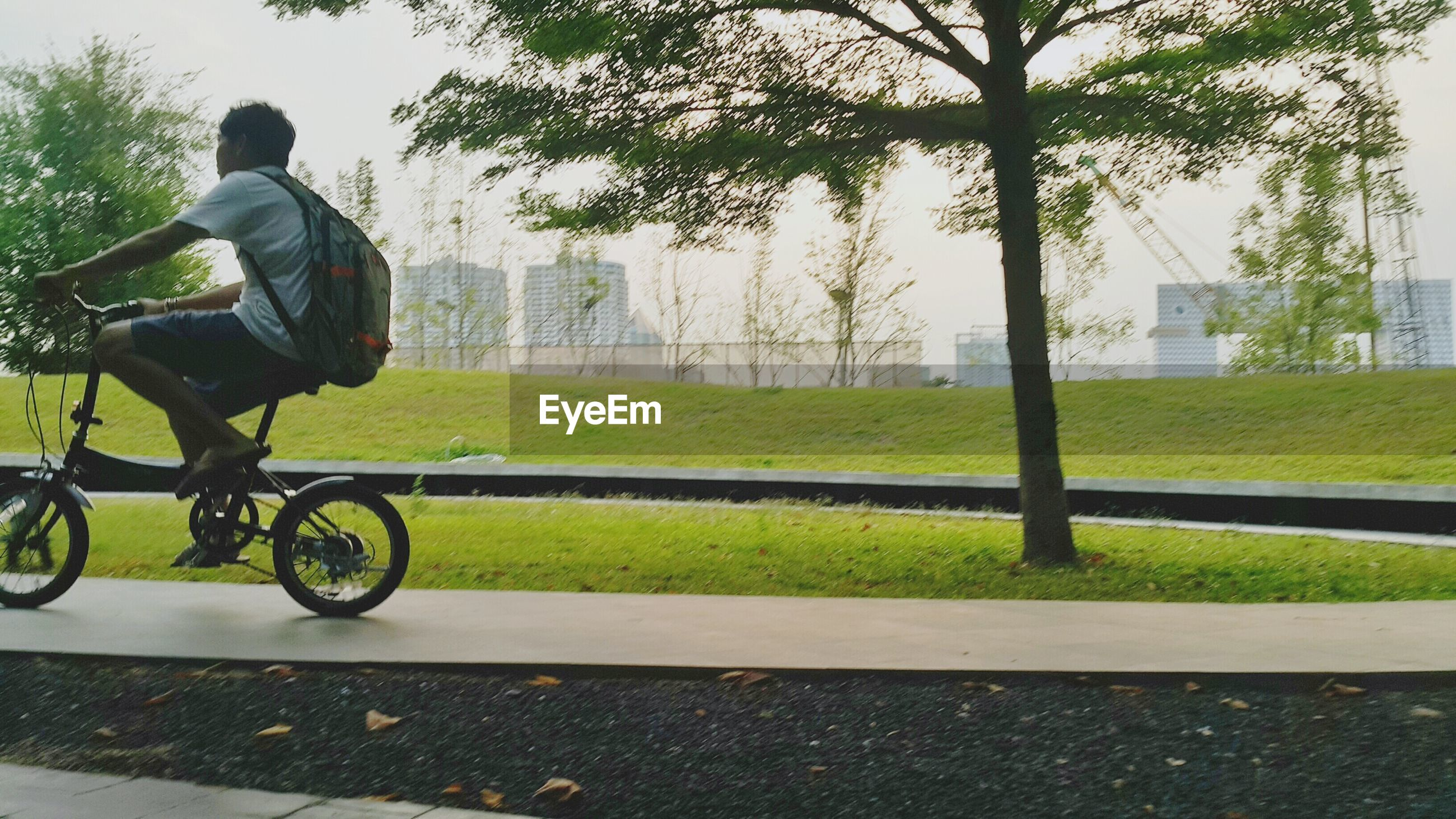 lifestyles, leisure activity, bicycle, men, grass, tree, full length, street, land vehicle, road, transportation, side view, park - man made space, riding, cycling, day, casual clothing, sunlight