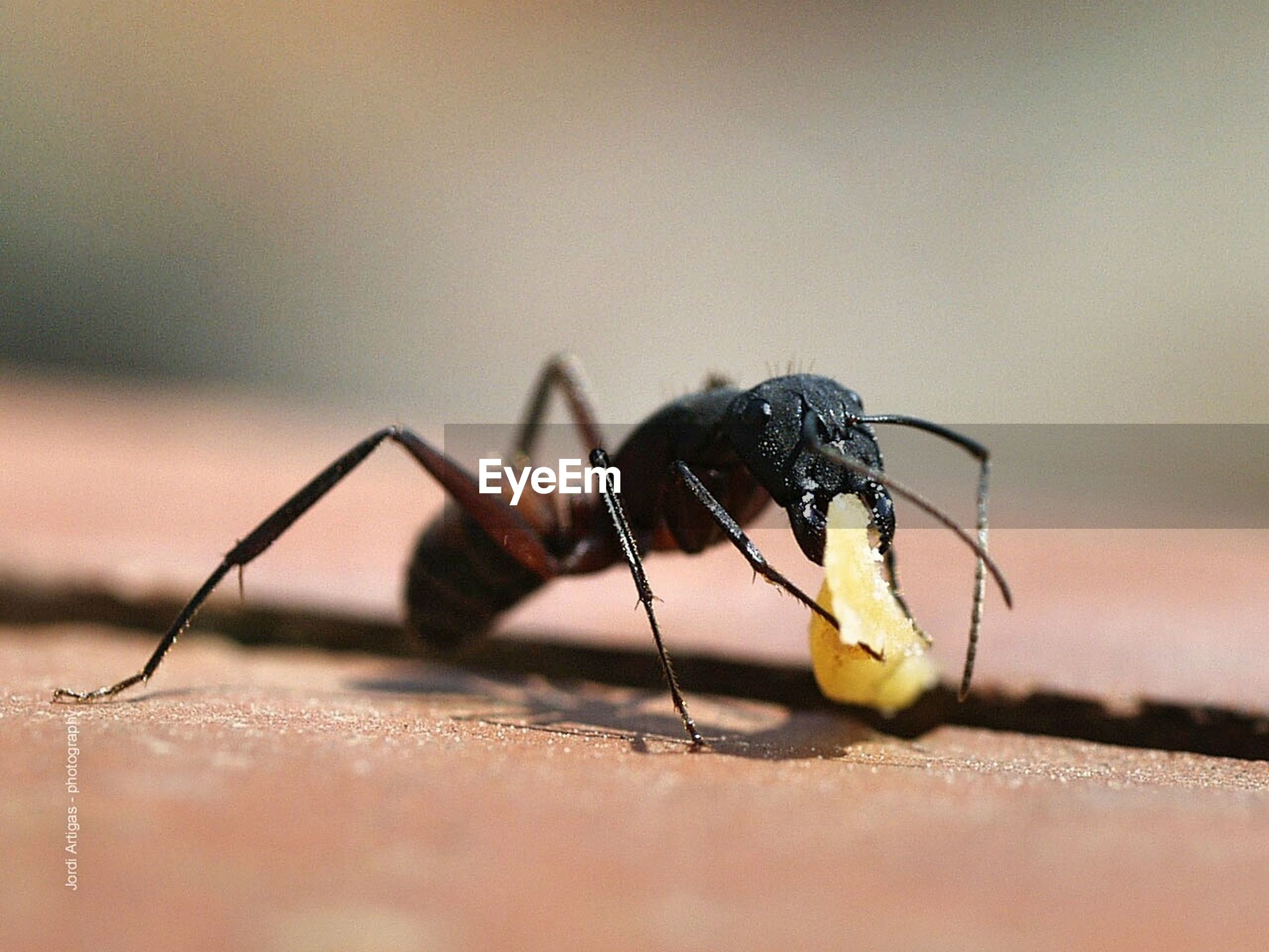 one animal, animal themes, insect, animals in the wild, close-up, wildlife, focus on foreground, animal antenna, selective focus, metal, outdoors, day, no people, nature, black color, zoology, sunlight, animal wing, animal markings, grasshopper