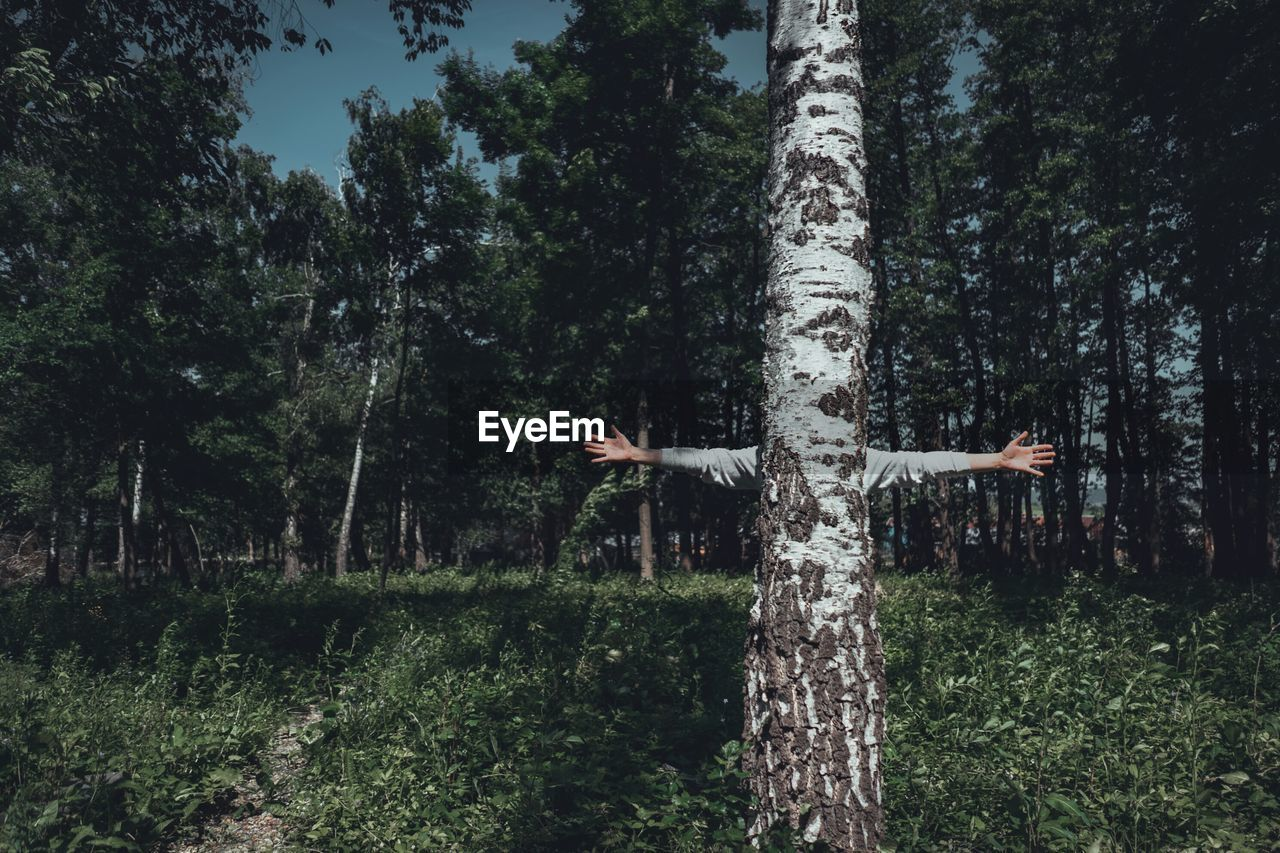 Person Behind Tree In Forest