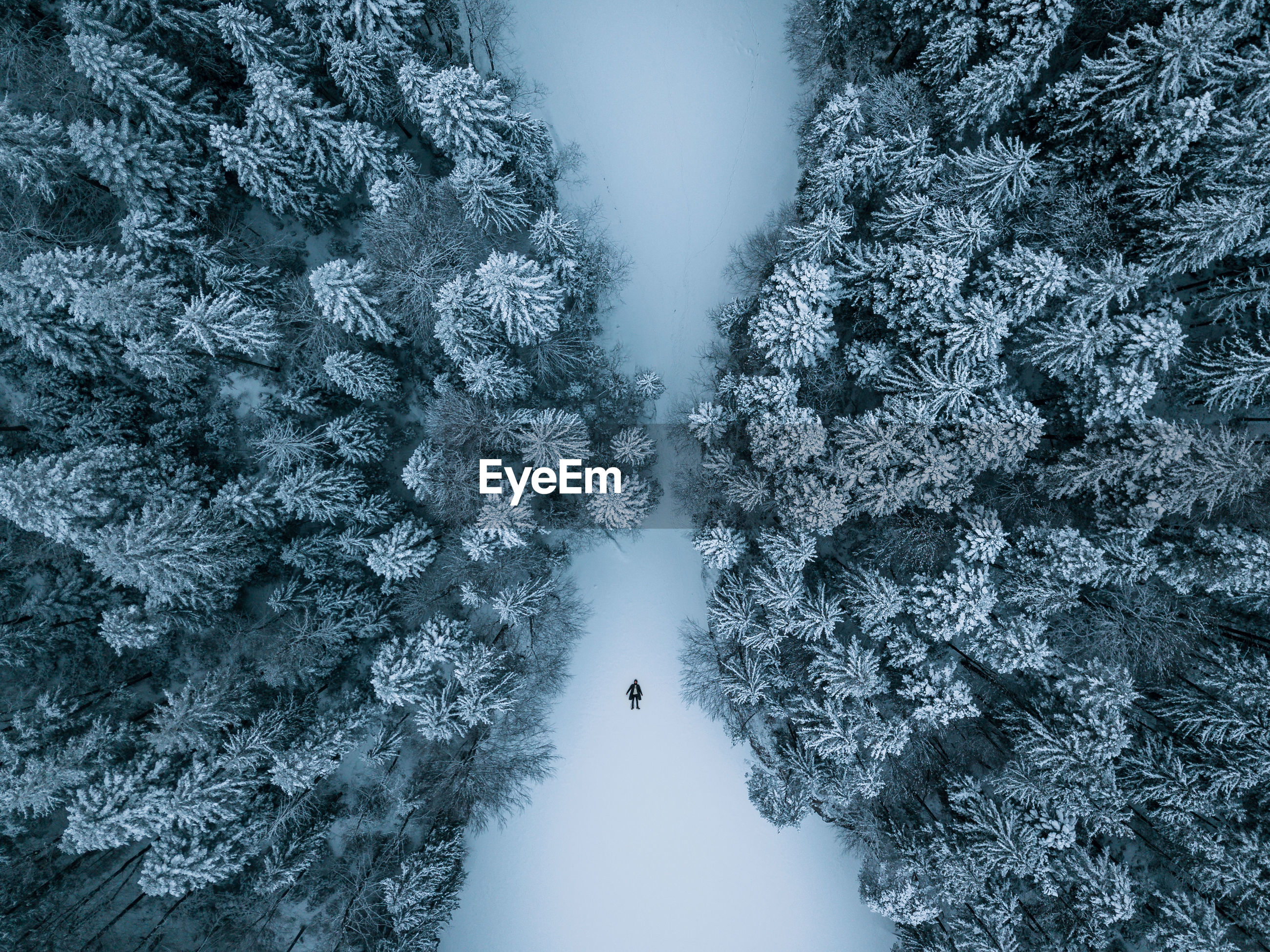 High angle view of trees on snow covered ground