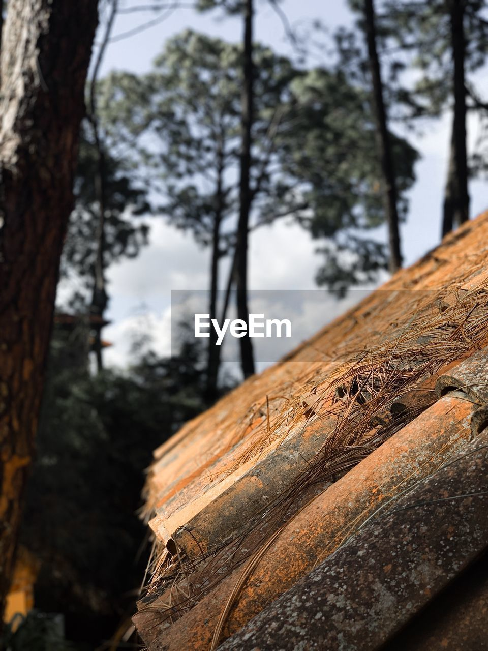 tree, focus on foreground, tree trunk, trunk, plant, close-up, wood - material, textured, nature, no people, day, outdoors, forest, rough, wood, log, tranquility, brown, timber, bark