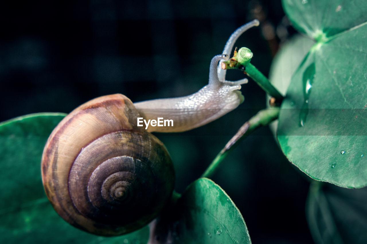 Close-Up Of Snail On Leaf