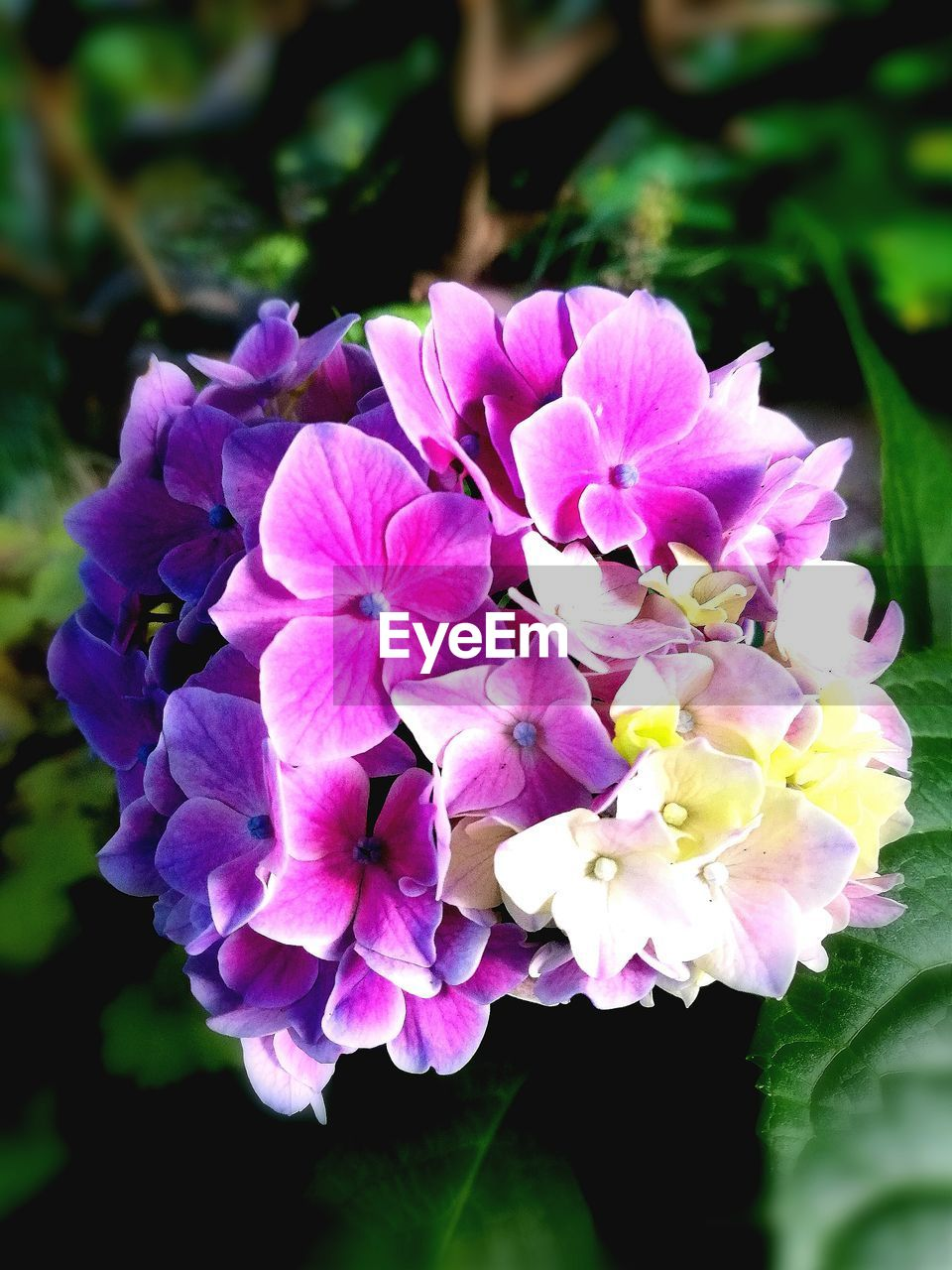 flower, beauty in nature, petal, nature, growth, plant, fragility, purple, pink color, no people, outdoors, freshness, flower head, blooming, day, close-up