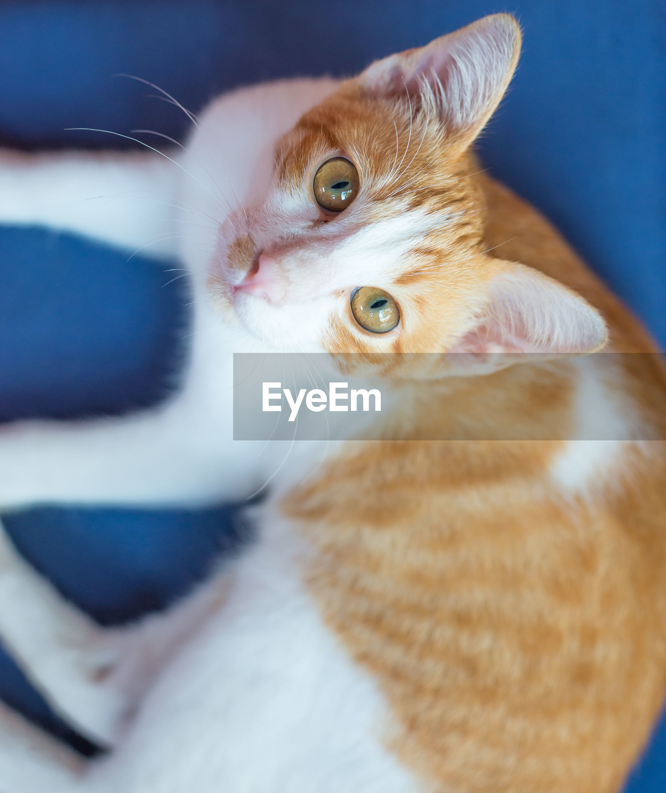 domestic cat, pets, one animal, feline, domestic animals, mammal, animal themes, looking at camera, indoors, cat, portrait, no people, ginger cat, yellow eyes, close-up, day
