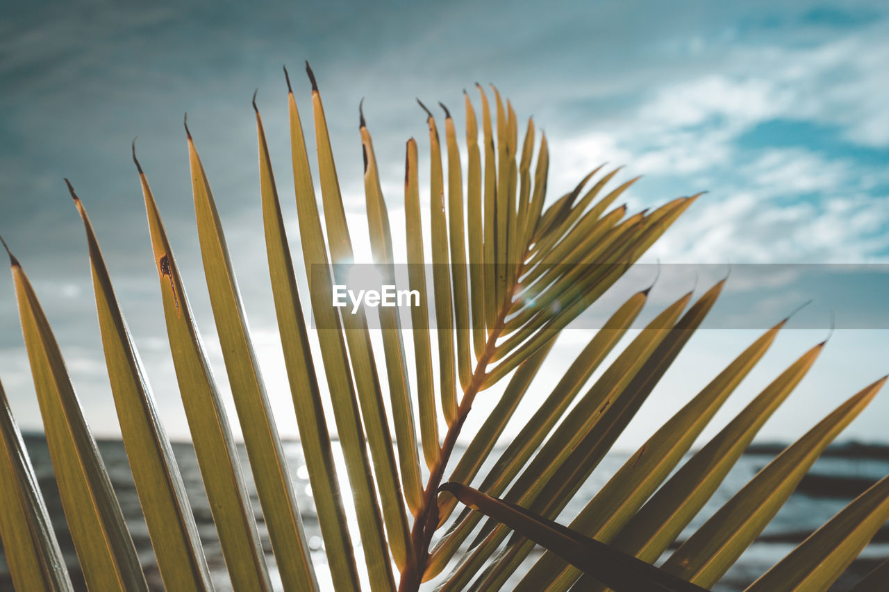 growth, beauty in nature, plant, nature, day, sky, no people, close-up, focus on foreground, leaf, palm leaf, tranquility, low angle view, sunlight, outdoors, palm tree, plant part, cloud - sky, tree, freshness, blade of grass