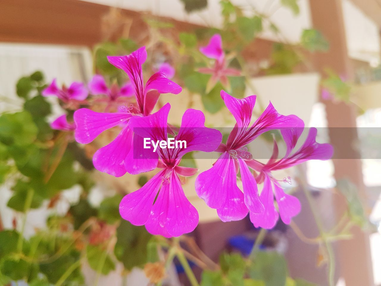 flower, plant, fragility, focus on foreground, beauty in nature, growth, petal, day, nature, close-up, outdoors, no people, leaf, flower head, freshness, blooming, periwinkle