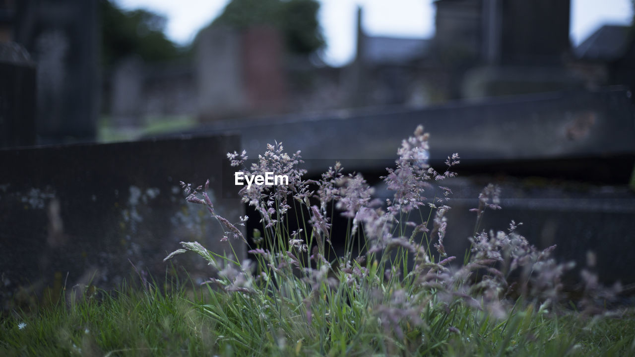 flowering plant, flower, plant, growth, nature, freshness, no people, day, beauty in nature, fragility, focus on foreground, vulnerability, land, outdoors, architecture, selective focus, built structure, tranquility, water, close-up, purple