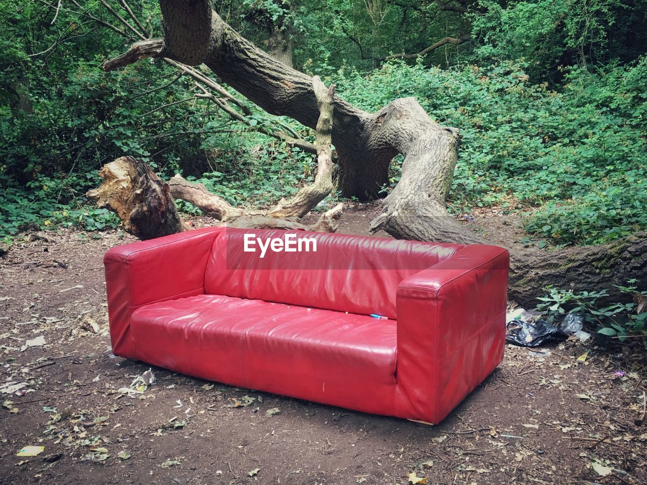 tree, one animal, animal themes, day, mammal, no people, red, armchair, growth, outdoors, nature, plant, domestic animals