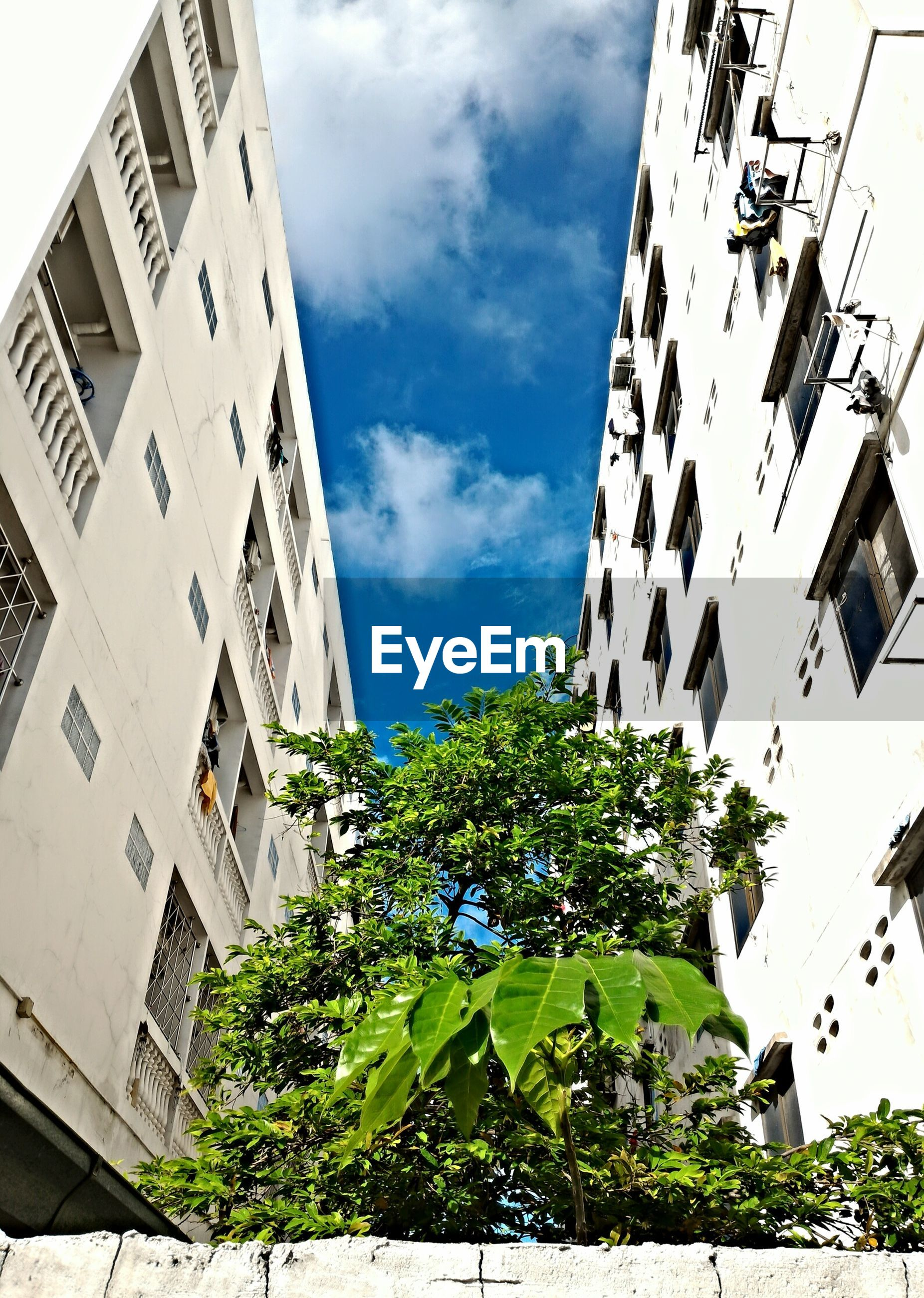 Low angle view of plants amidst buildings against sky