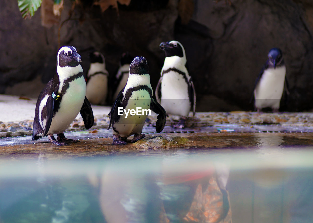 bird, group of animals, animal, animal themes, animal wildlife, animals in the wild, vertebrate, no people, penguin, selective focus, close-up, day, nature, water, outdoors, three animals, perching