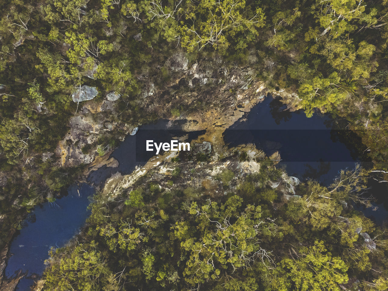 HIGH ANGLE VIEW OF TREES GROWING ON ROCK