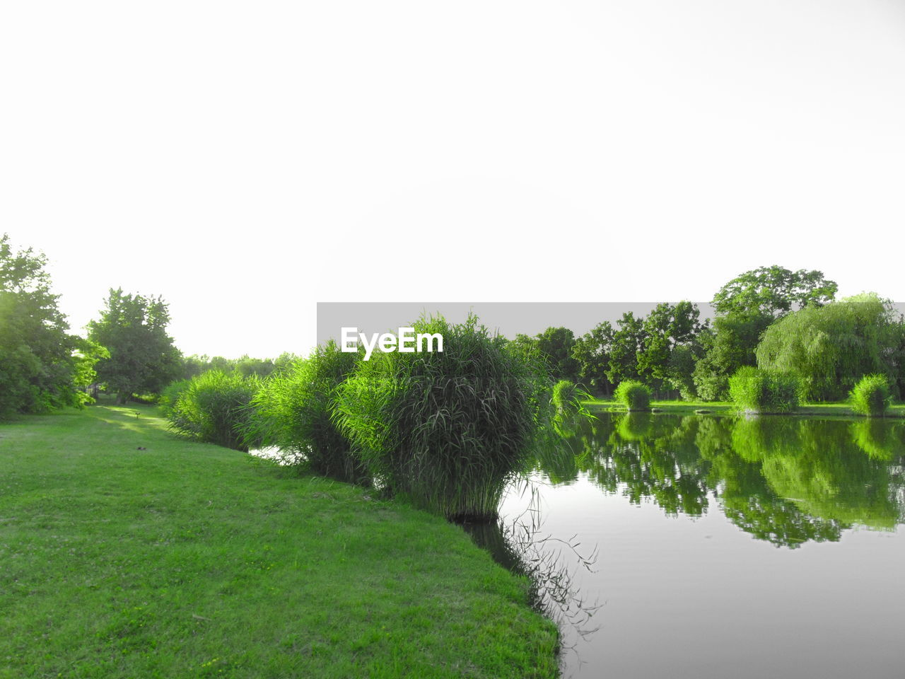 plant, tree, water, green color, copy space, sky, nature, tranquility, lake, scenics - nature, clear sky, tranquil scene, no people, grass, beauty in nature, day, environment, growth, reflection, outdoors