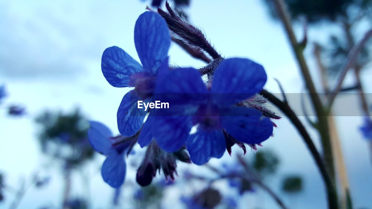 plant, flowering plant, flower, beauty in nature, growth, vulnerability, freshness, fragility, close-up, purple, petal, flower head, nature, inflorescence, selective focus, no people, focus on foreground, day, blue, one animal, pollen, pollination
