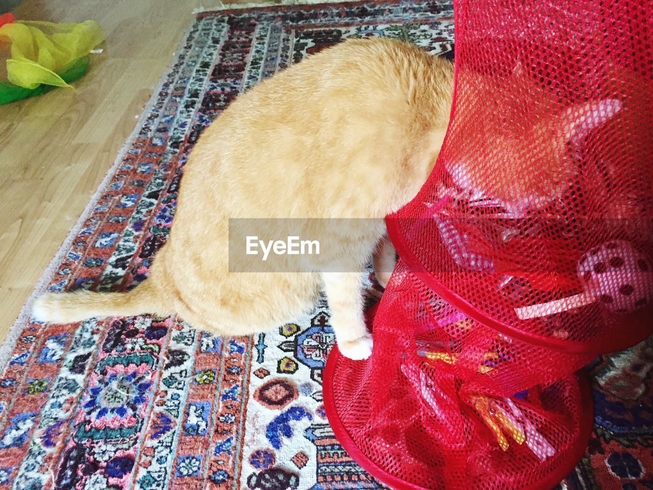 pets, domestic animals, mammal, domestic cat, indoors, animal themes, one animal, high angle view, no people, feline, day, close-up