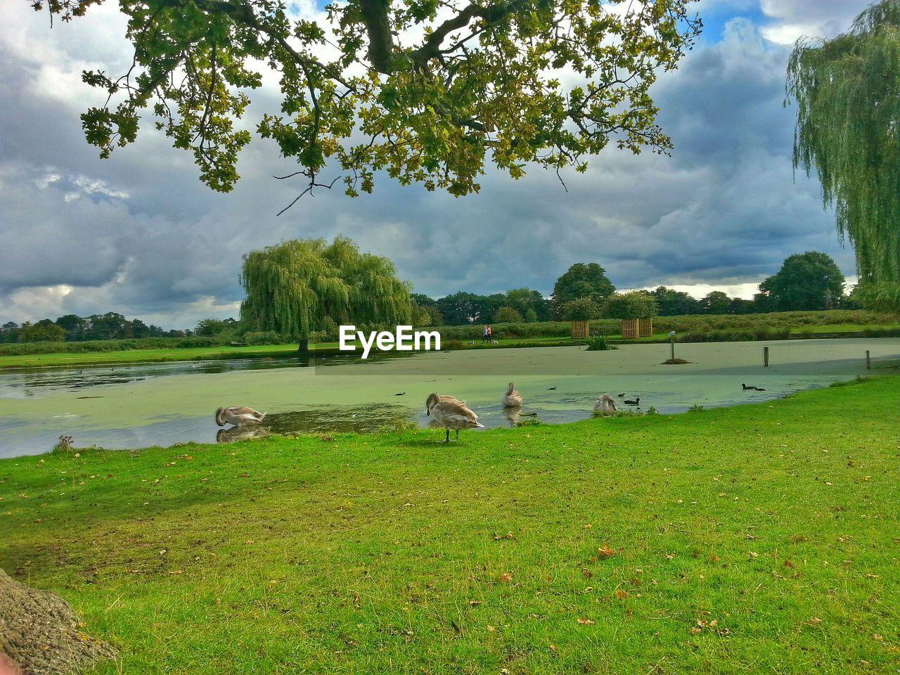 Birds At Bushy Park Against Cloudy Sky