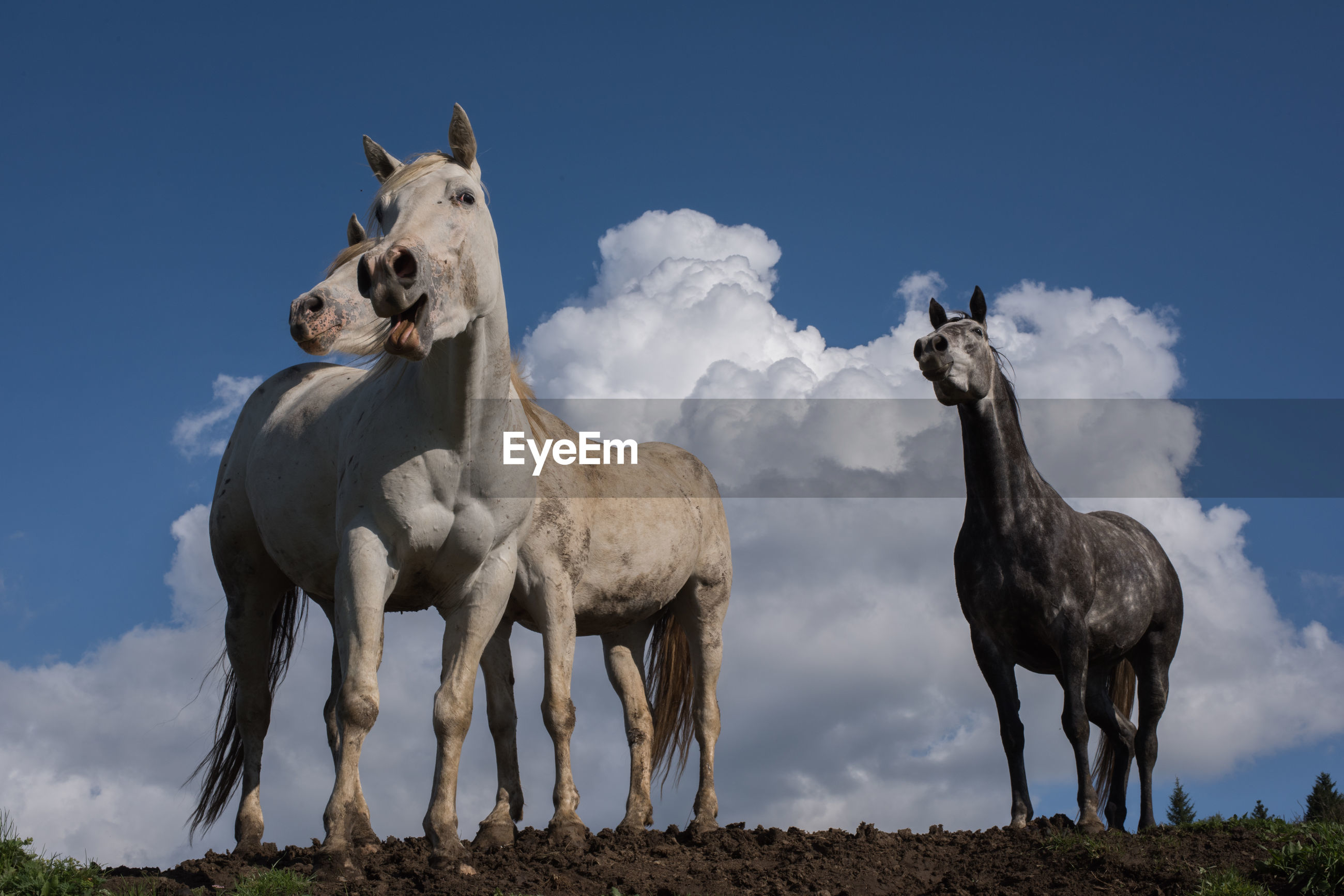 LOW ANGLE VIEW OF HORSE ON FIELD