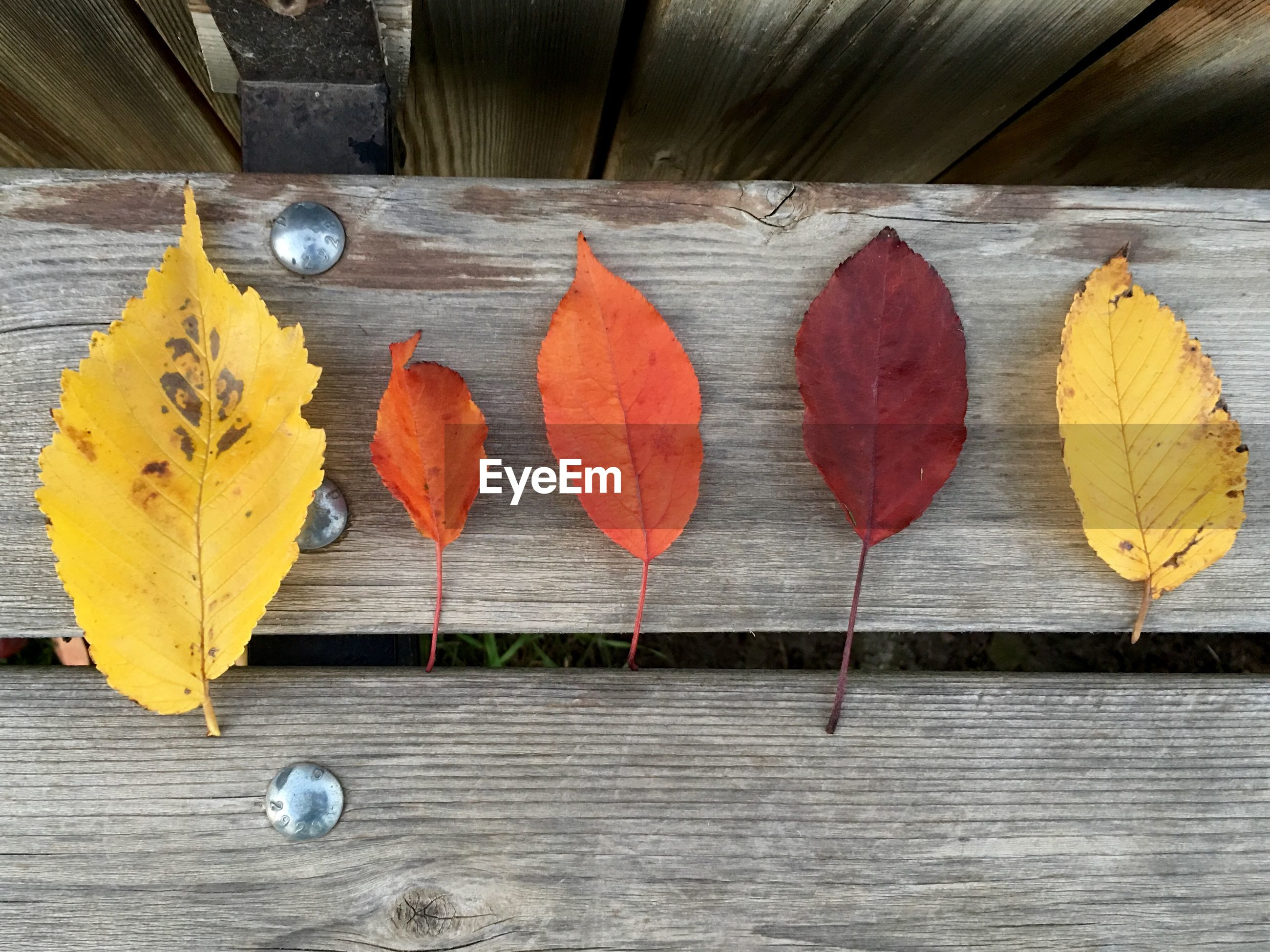 High angle view of various dry leaves on wooden table