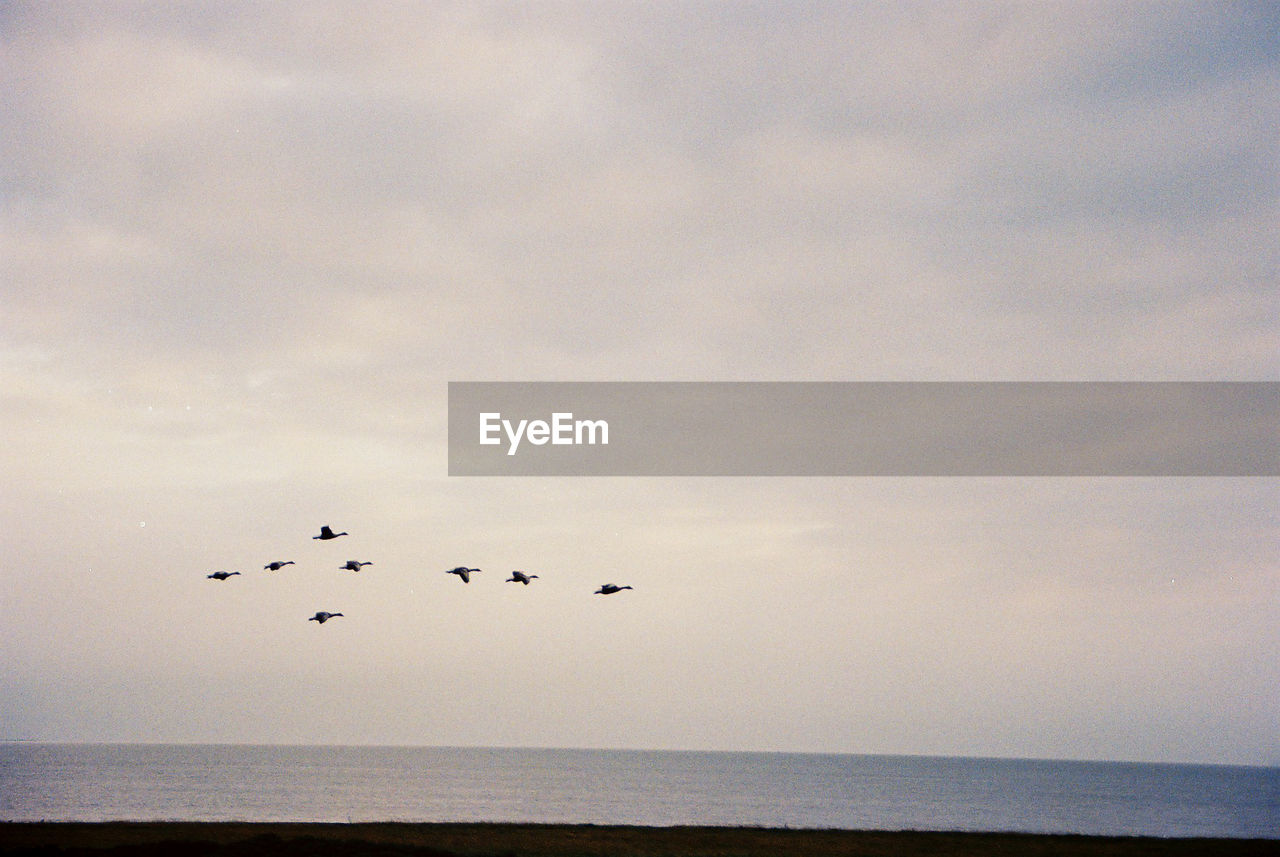 sky, horizon over water, horizon, cloud - sky, bird, animal, animal themes, group of animals, flying, beauty in nature, sea, vertebrate, animals in the wild, water, animal wildlife, scenics - nature, tranquility, tranquil scene, nature, no people, flock of birds, outdoors