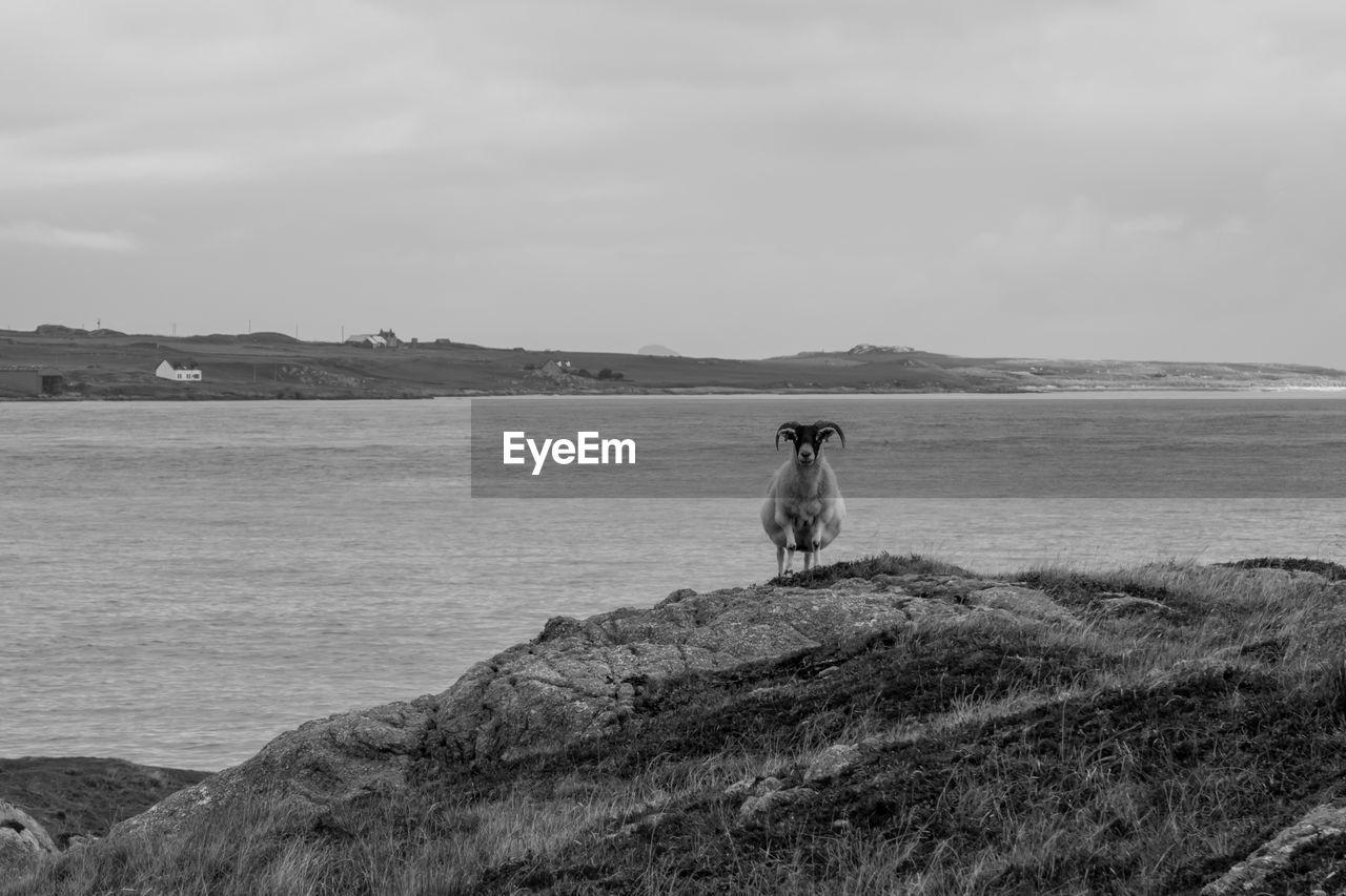DOG SITTING ON ROCK AGAINST SEA