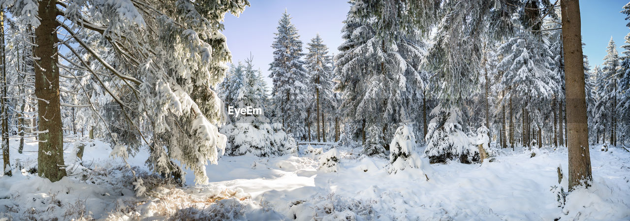 Scenic View Of Snow Covered Land And Trees