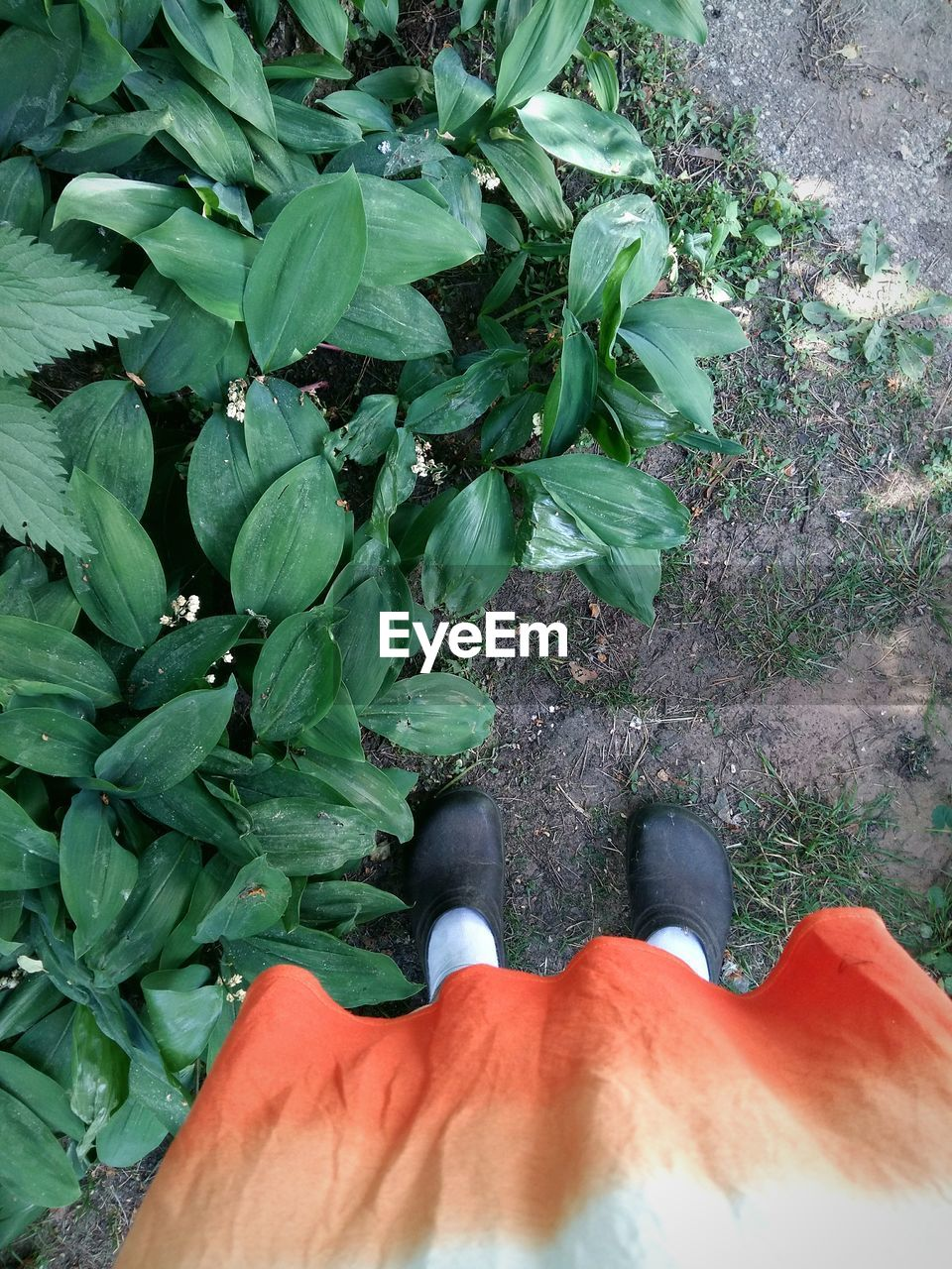low section, human leg, day, one person, outdoors, green color, high angle view, standing, shoe, real people, leaf, human body part, nature, growth, lifestyles, plant, people