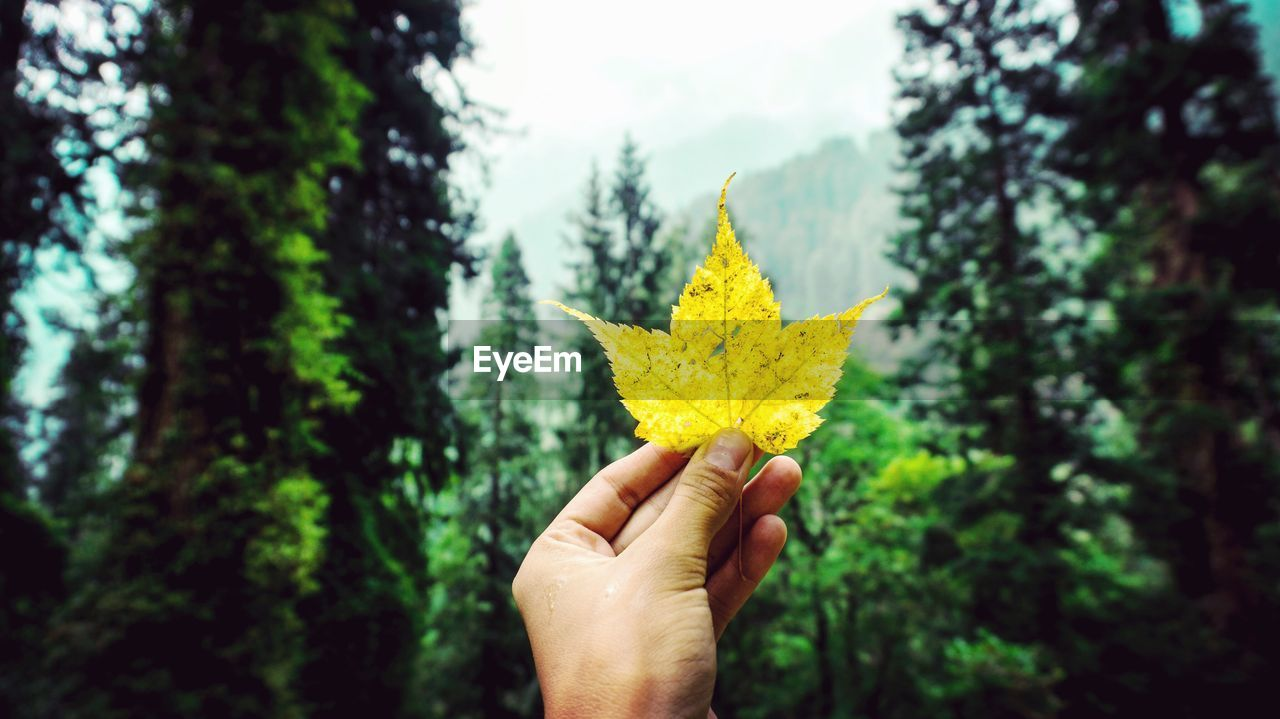 human hand, hand, one person, human body part, plant, yellow, holding, tree, real people, nature, personal perspective, finger, body part, human finger, unrecognizable person, focus on foreground, lifestyles, leaf, autumn, plant part, change, outdoors, maple leaf, leaves, autumn collection, human limb