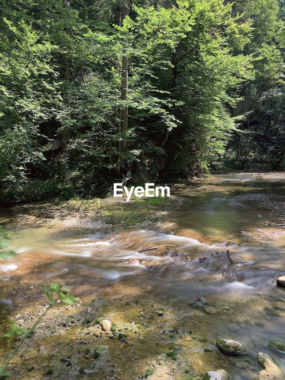 water, tree, forest, plant, nature, motion, no people, beauty in nature, land, day, flowing water, tranquility, scenics - nature, blurred motion, non-urban scene, river, growth, outdoors, tranquil scene, flowing, stream - flowing water, shallow