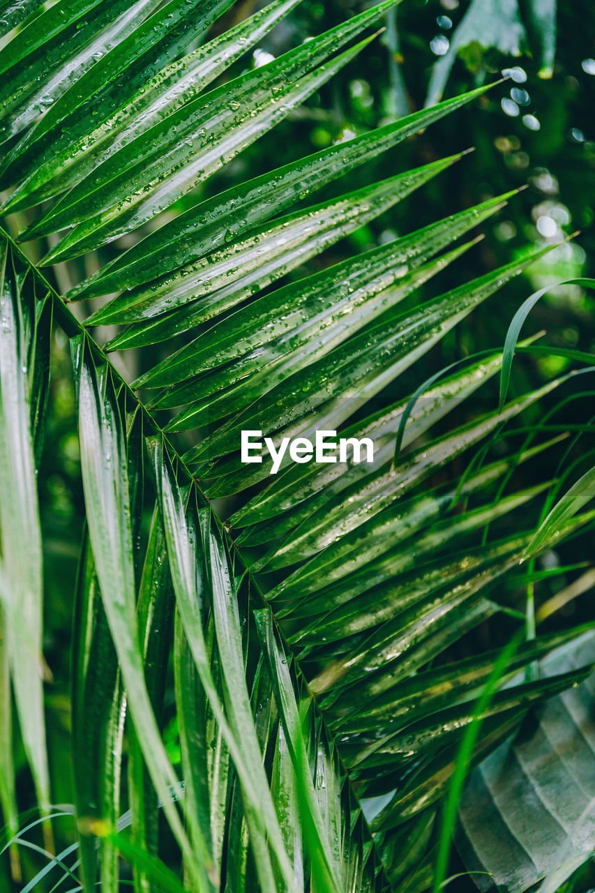 green color, plant, growth, leaf, beauty in nature, nature, plant part, close-up, day, no people, selective focus, outdoors, focus on foreground, freshness, grass, tranquility, natural pattern, green, palm leaf, tree, leaves, blade of grass