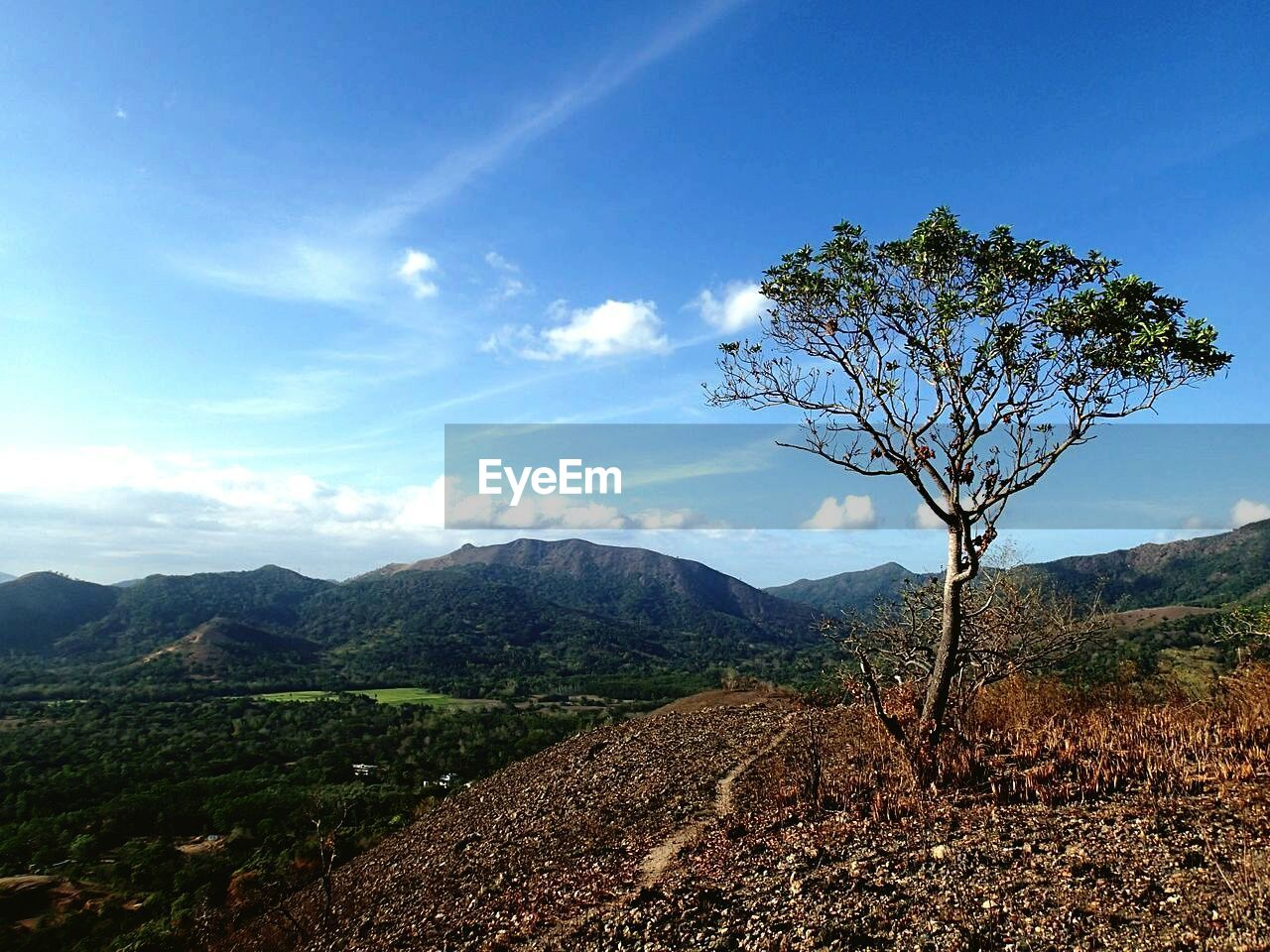 mountain, tree, landscape, sky, tranquility, nature, beauty in nature, tranquil scene, day, outdoors, no people, scenics, lone, branch