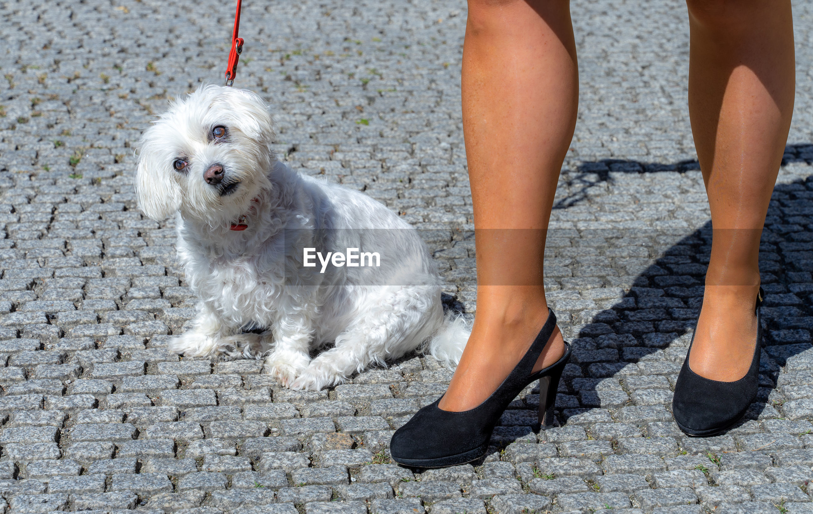 LOW SECTION OF WOMAN WITH DOG STANDING ON SMALL OUTDOORS