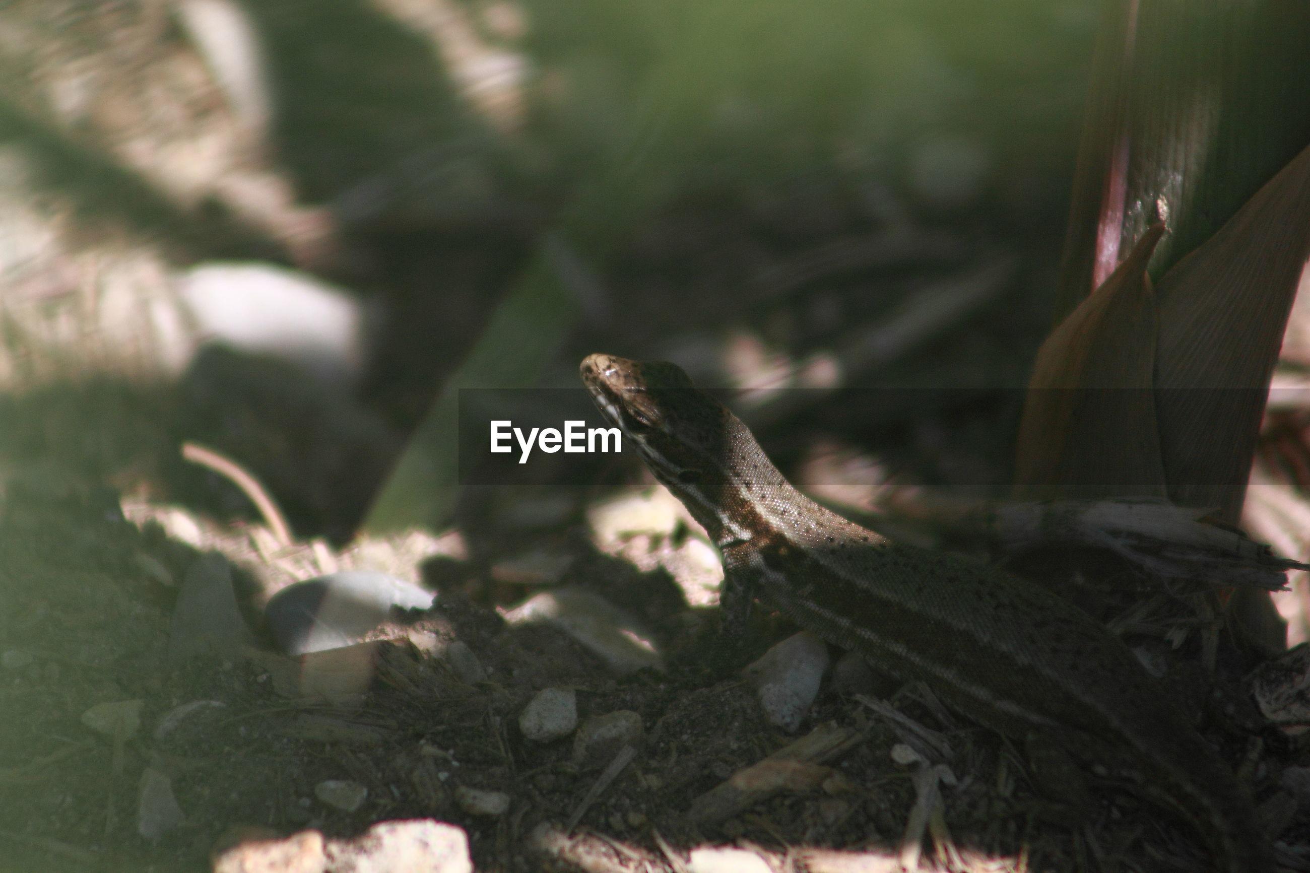 High angle view of snake