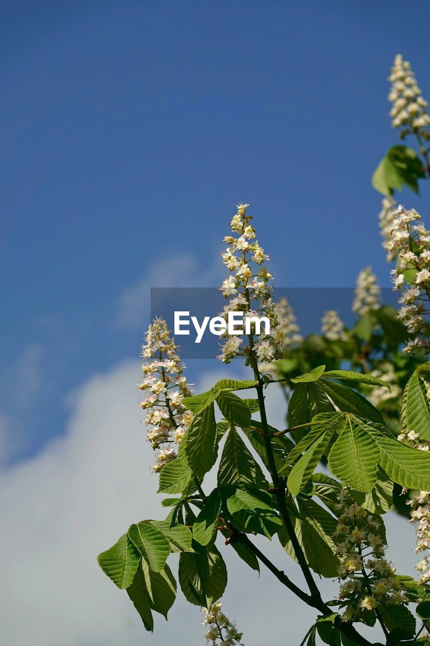 plant, growth, sky, beauty in nature, plant part, leaf, nature, flower, flowering plant, fragility, vulnerability, no people, close-up, day, low angle view, tranquility, freshness, green color, focus on foreground, sunlight, outdoors, flower head