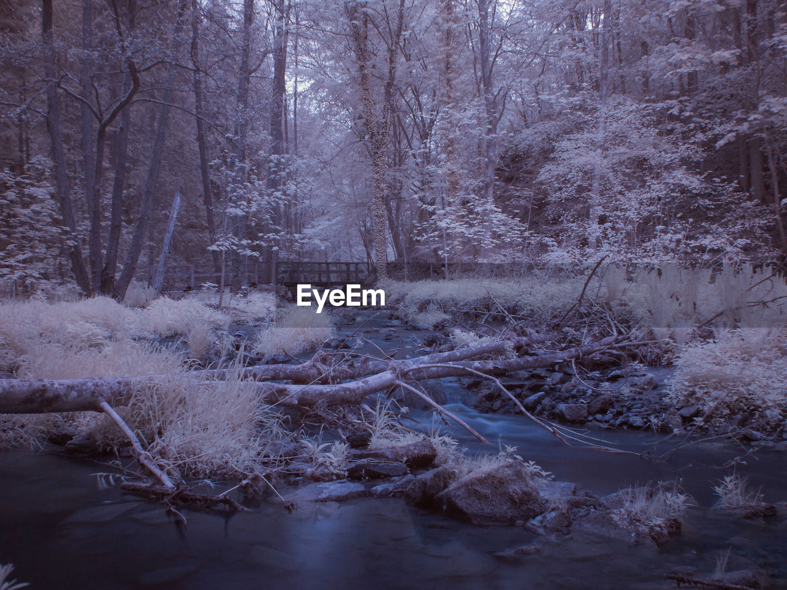FROZEN TREES IN FOREST